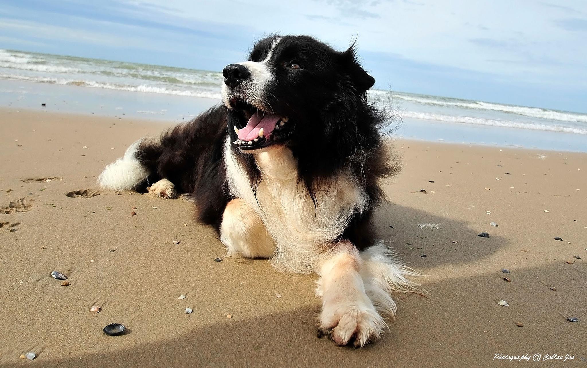 Photo in Animal #zee #hond #natuur
