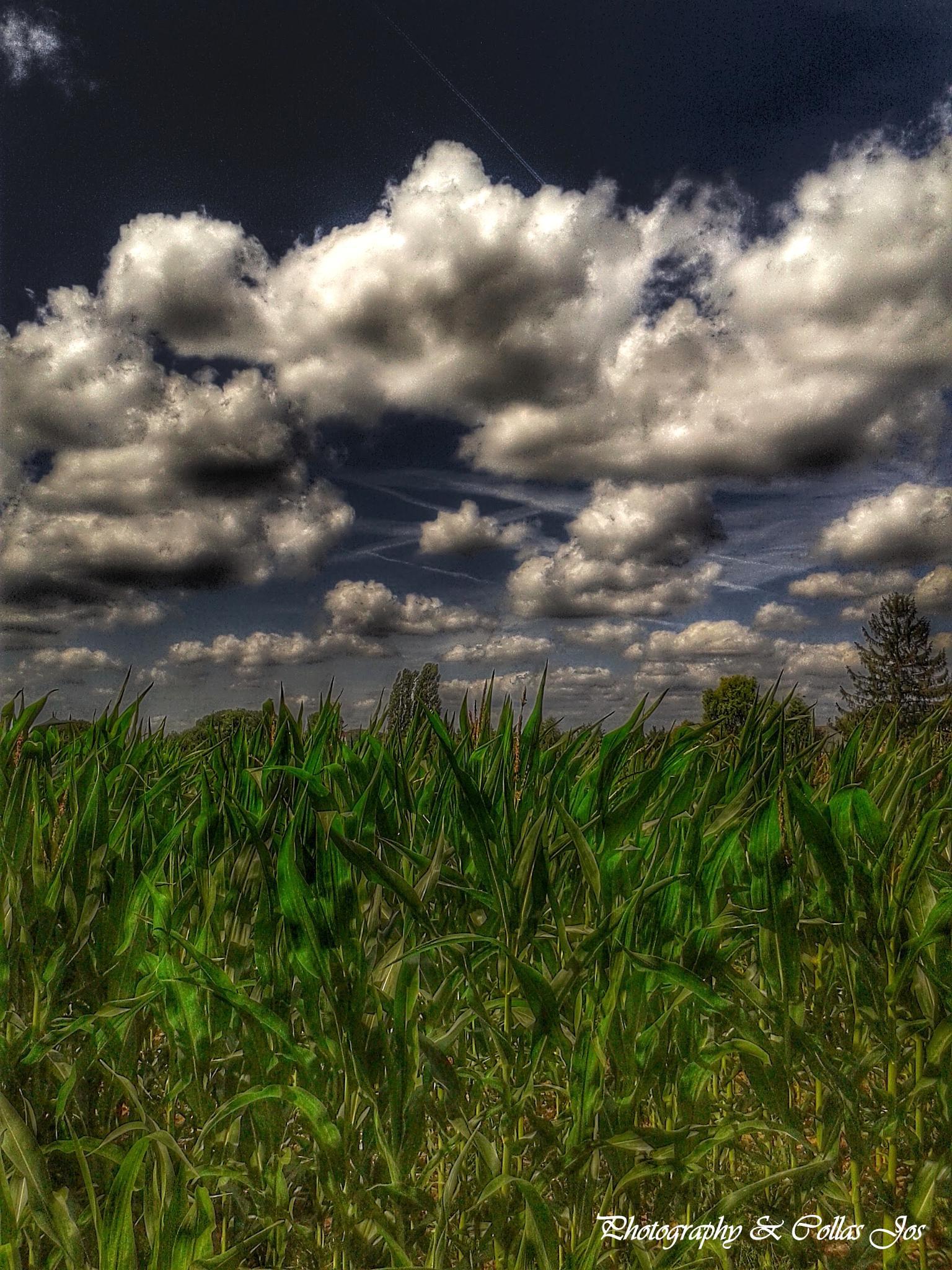 Wolken by collasjos