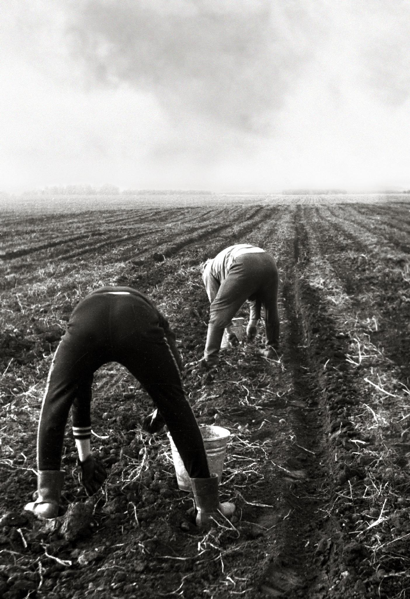 Soviet students and potato harvest by Сергей Юрьев