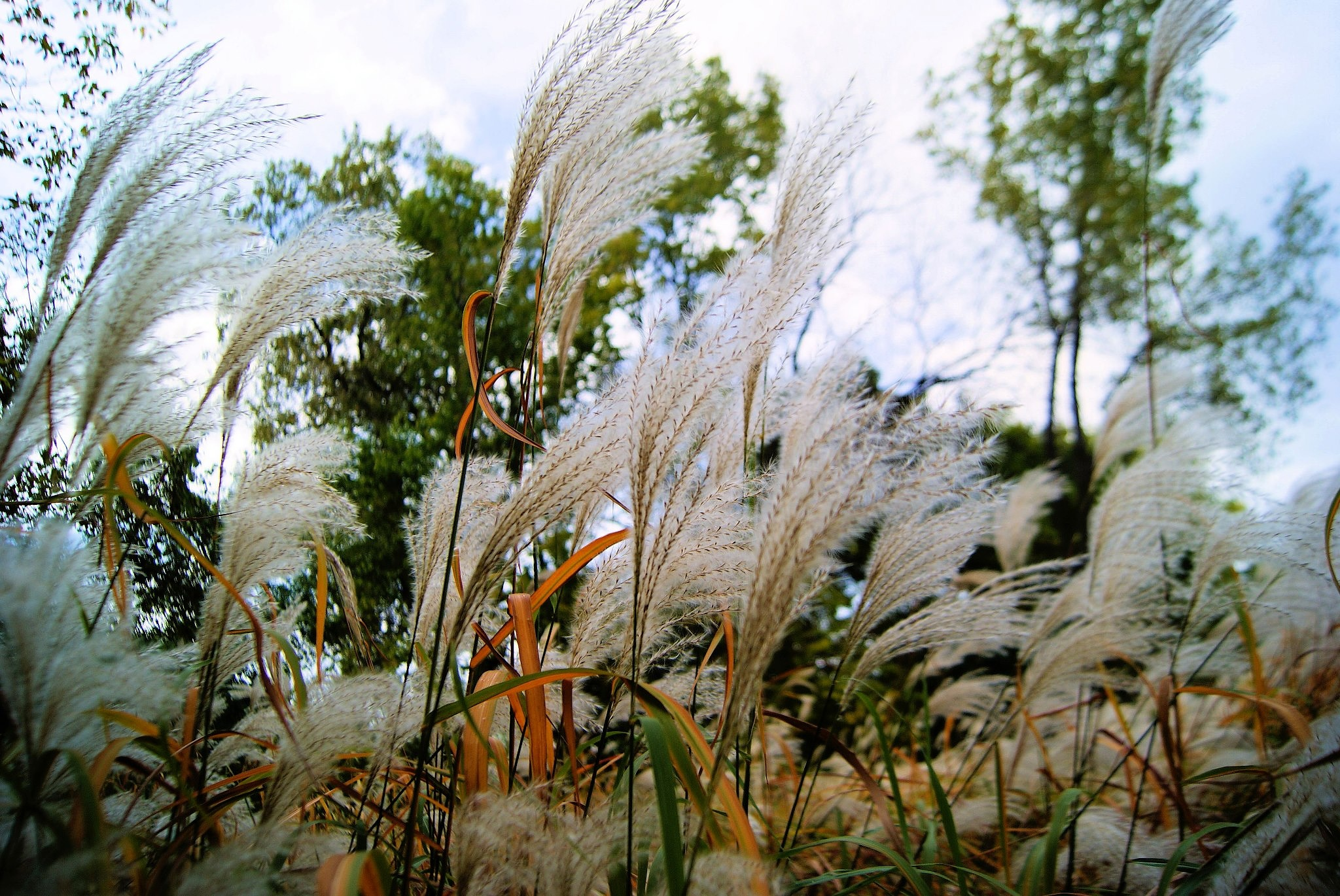 Pompass Grass by Live Truck Cam Prariedog