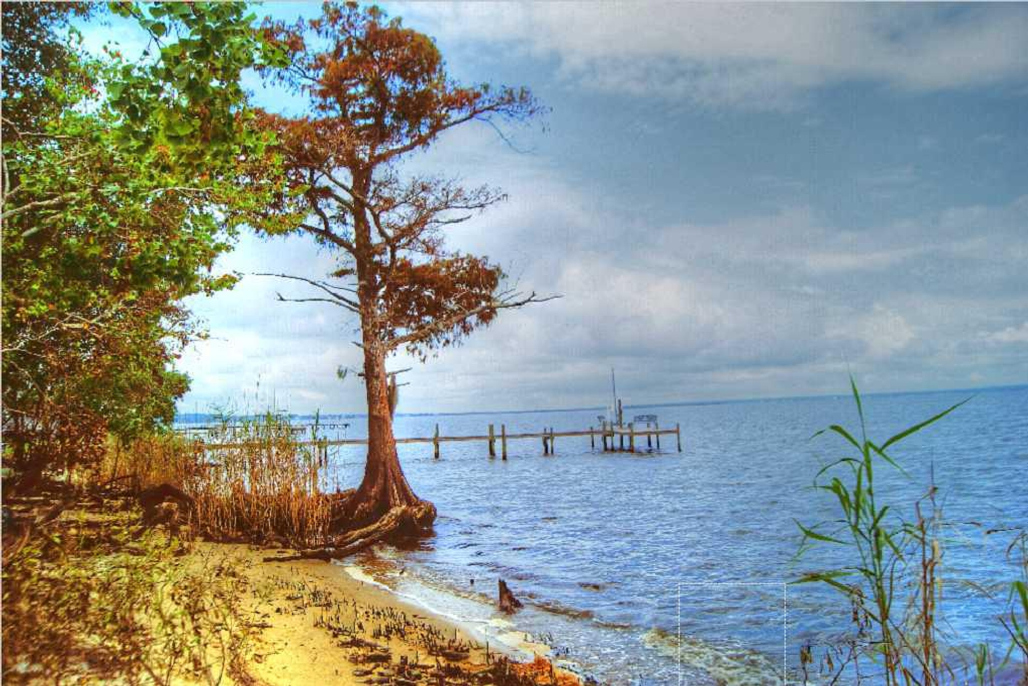 Escambia bay Florida by Live Truck Cam Prariedog