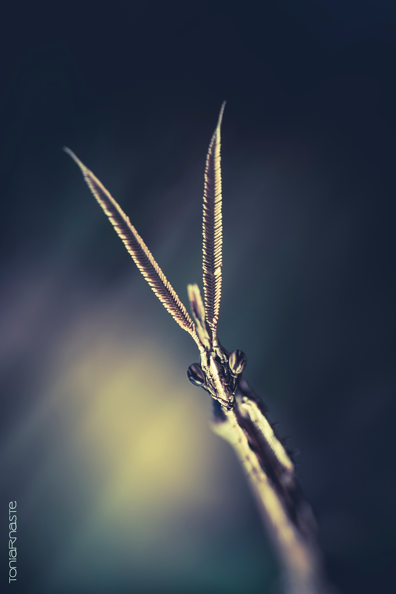 Photo in Macro #mantis #insect #macro