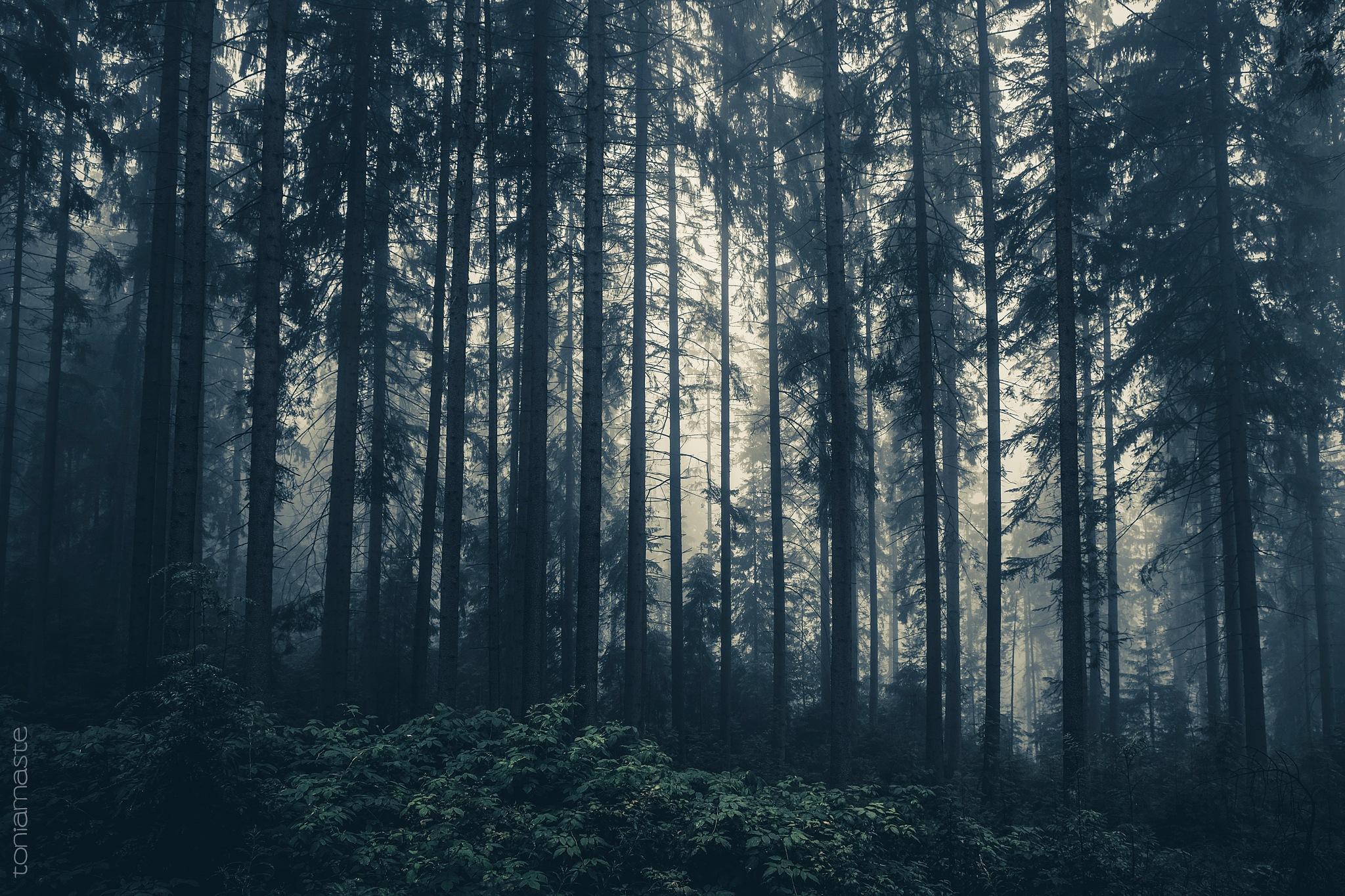 The eternal struggle between fog and light by Toni Arnaste