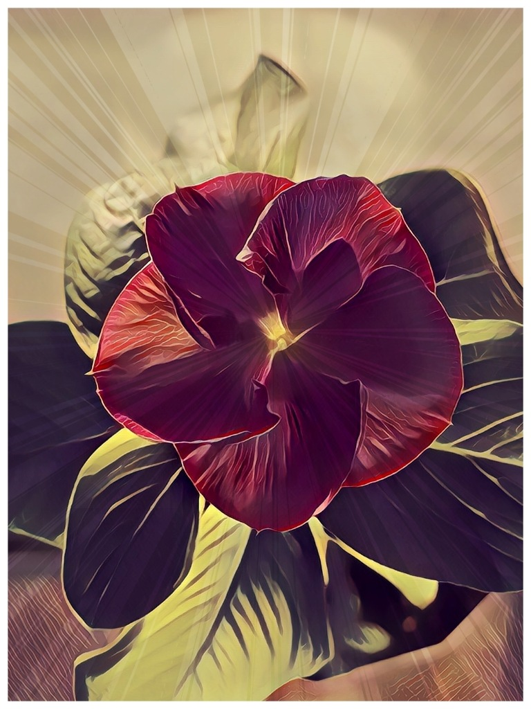 Abstract Flower by Shakeel Sukri