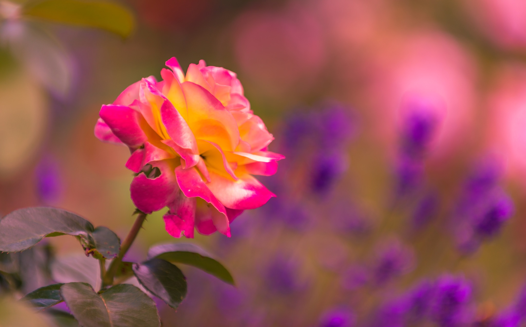 Colors by Sivakumar