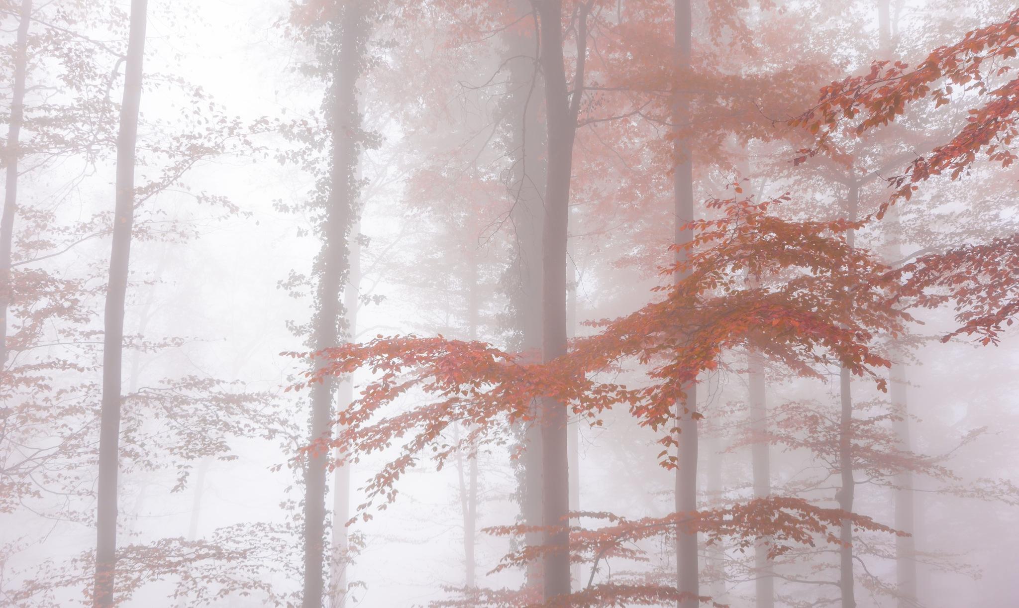 Morning mist by Sivakumar