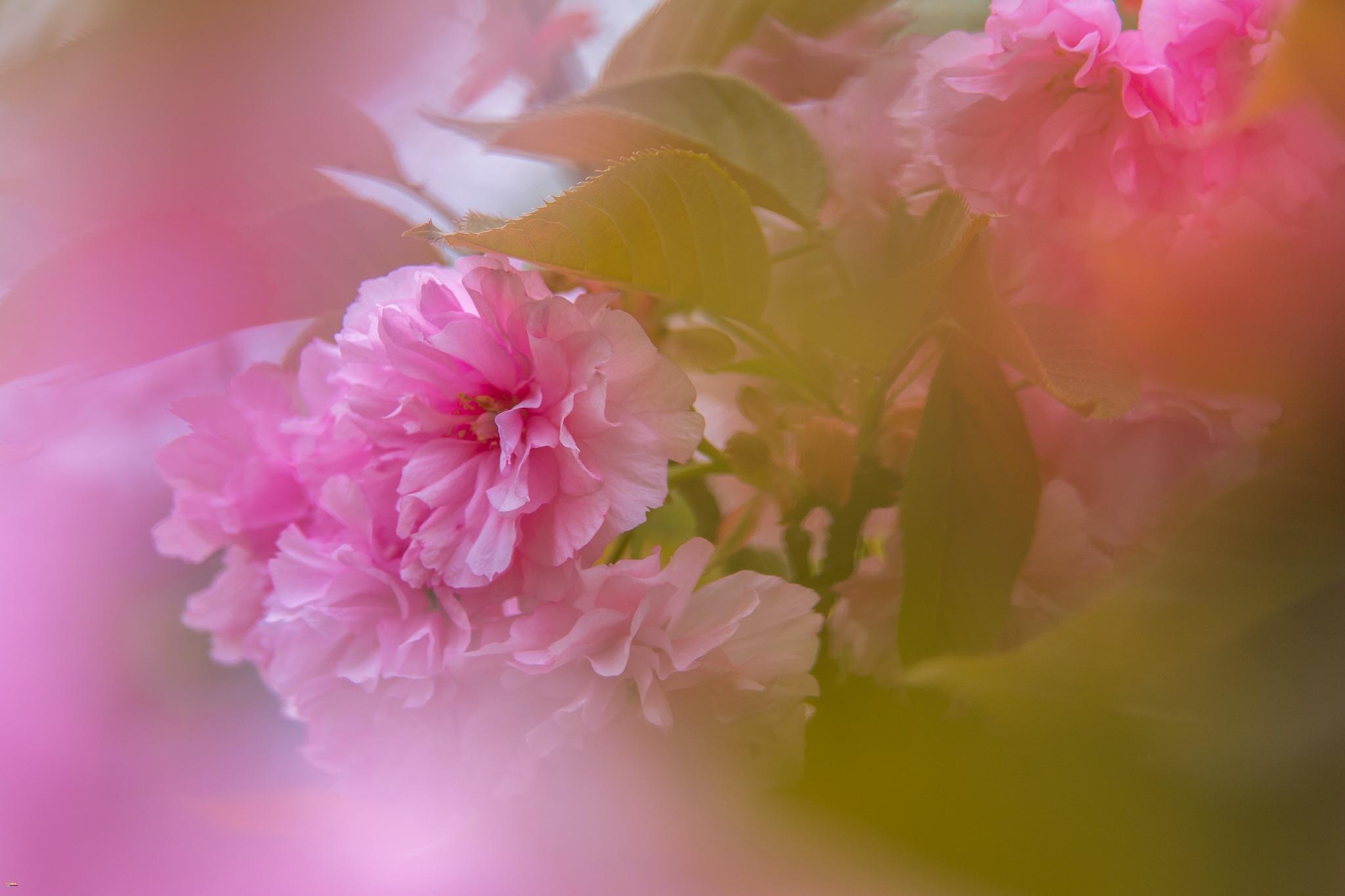 Beauty by Sivakumar