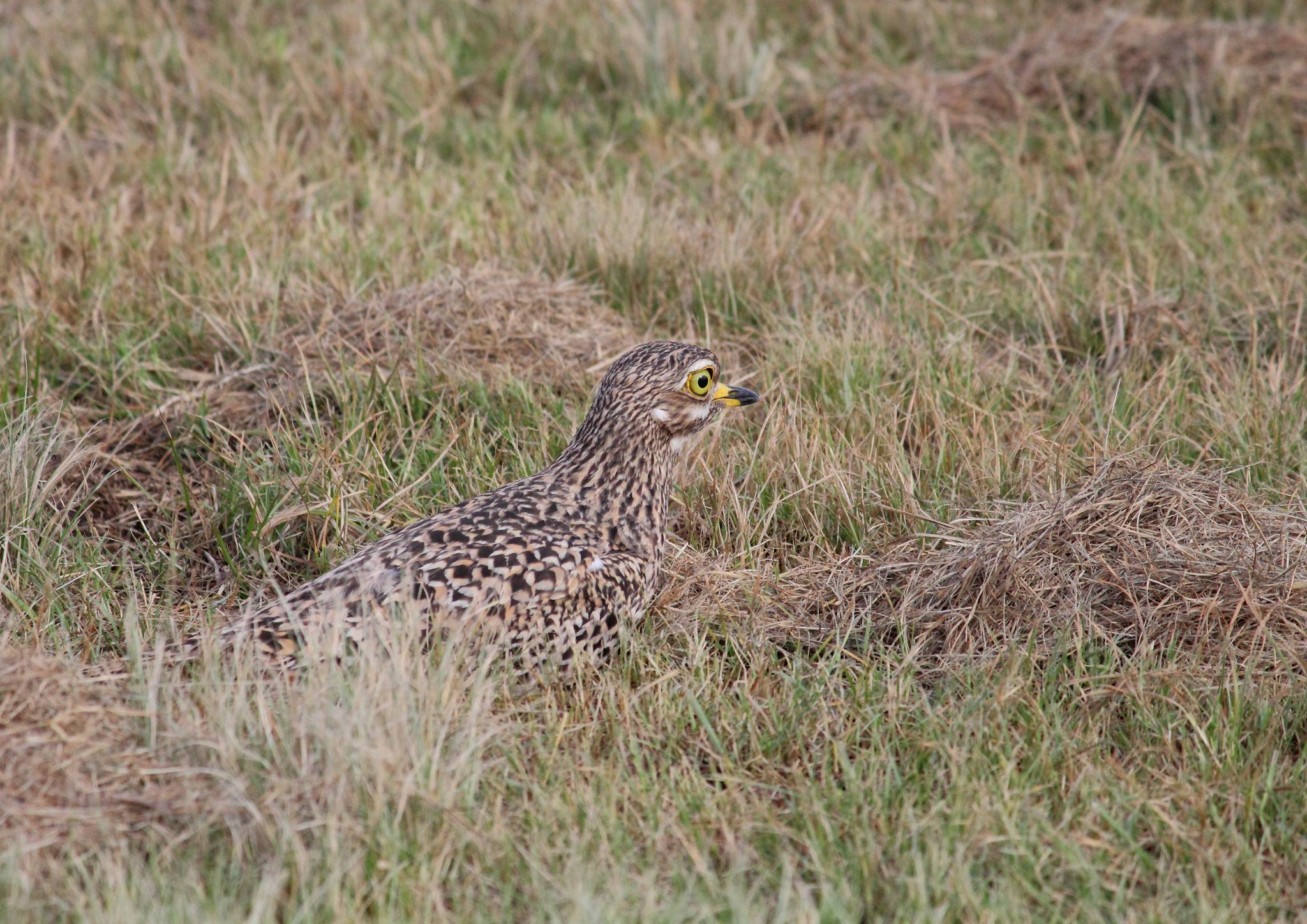 The Art of Camouflage  by Johnke