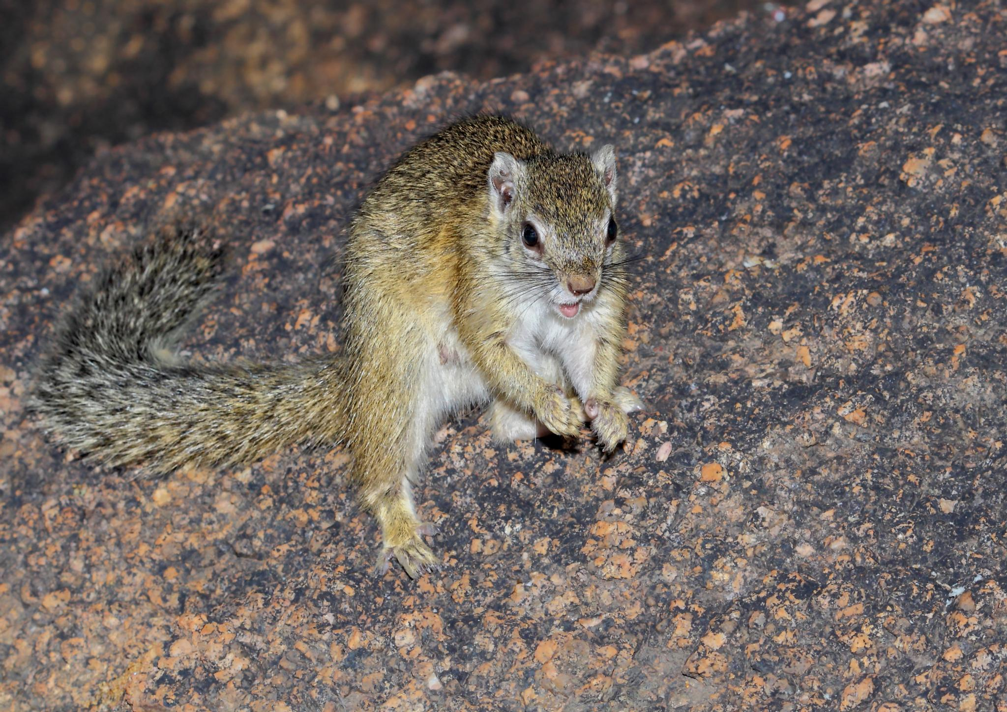The Tiny Tree Squirrel  by Johnke