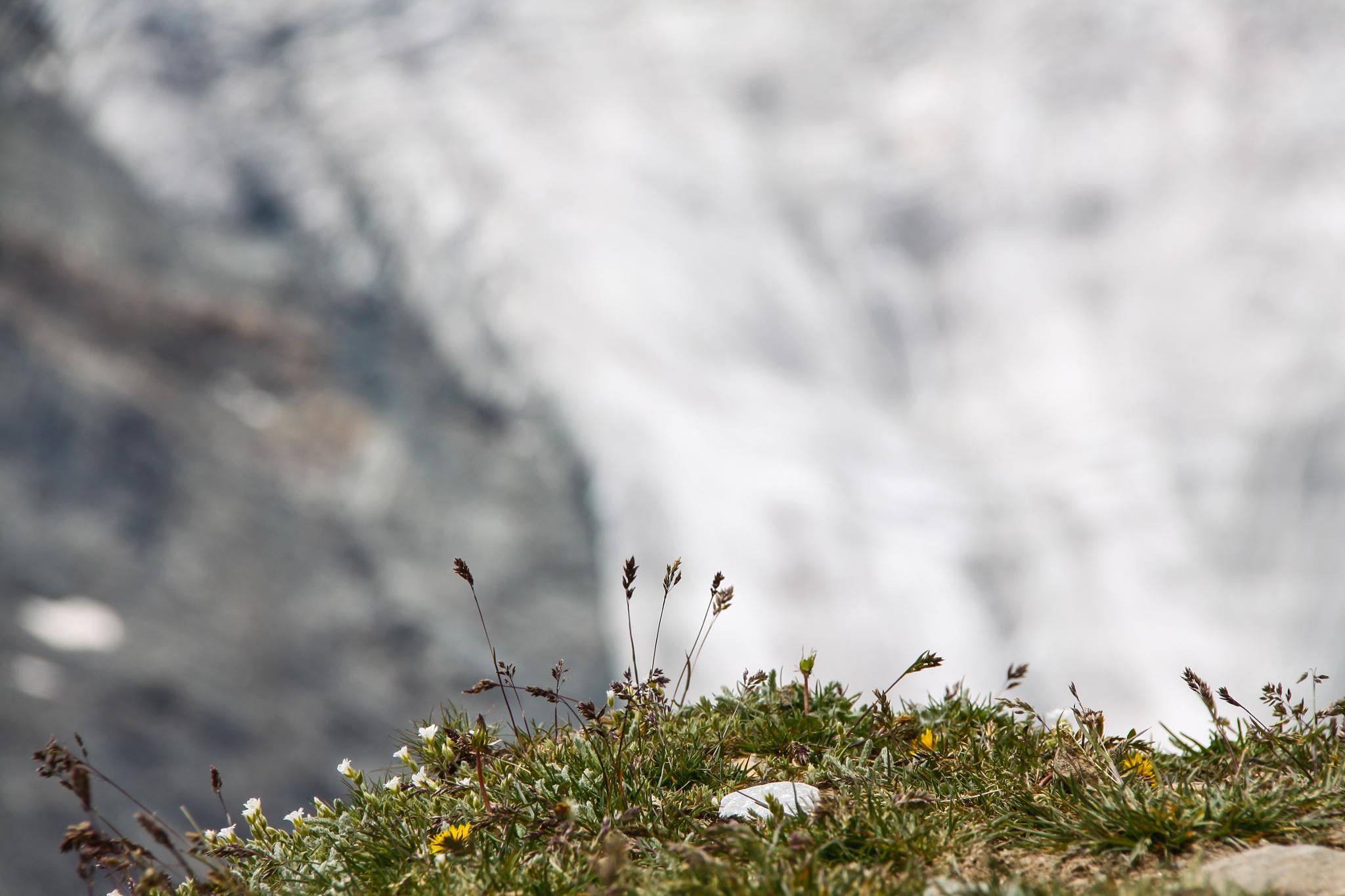 Alpine by Christoph Reiter
