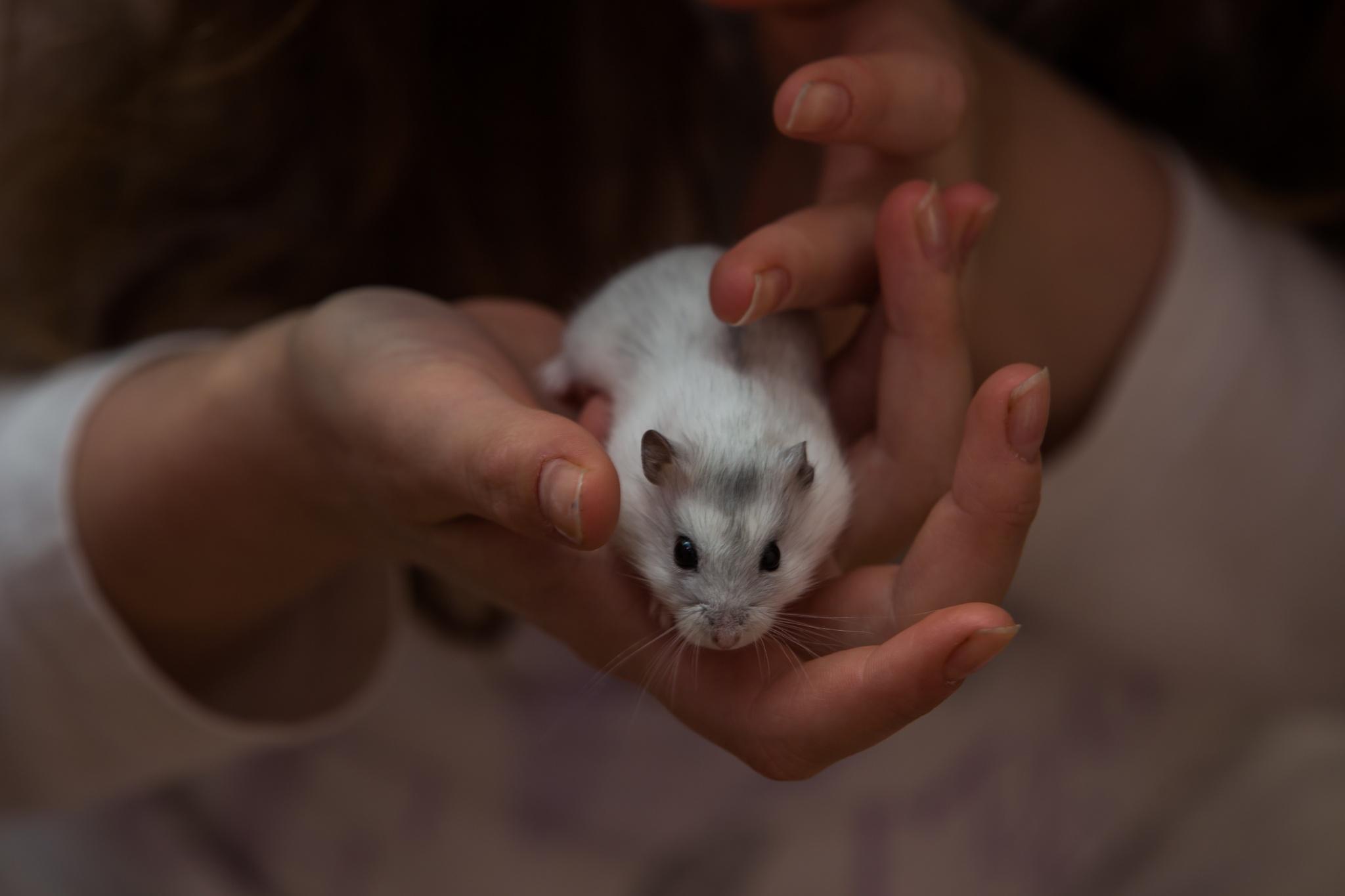 Hamster by Christoph Reiter
