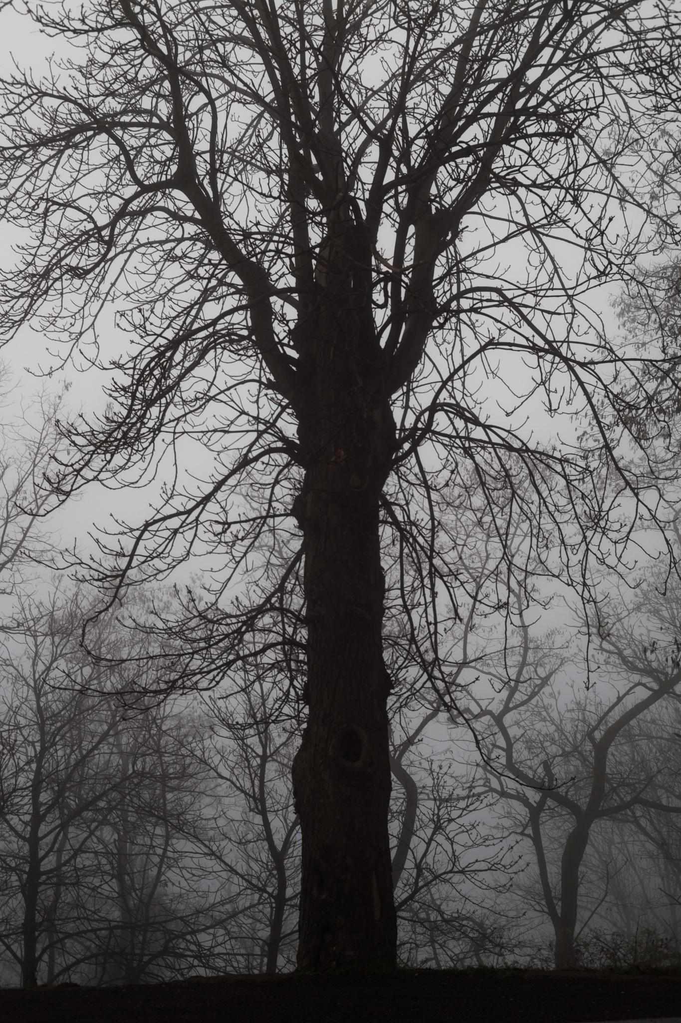 fog by Christoph Reiter