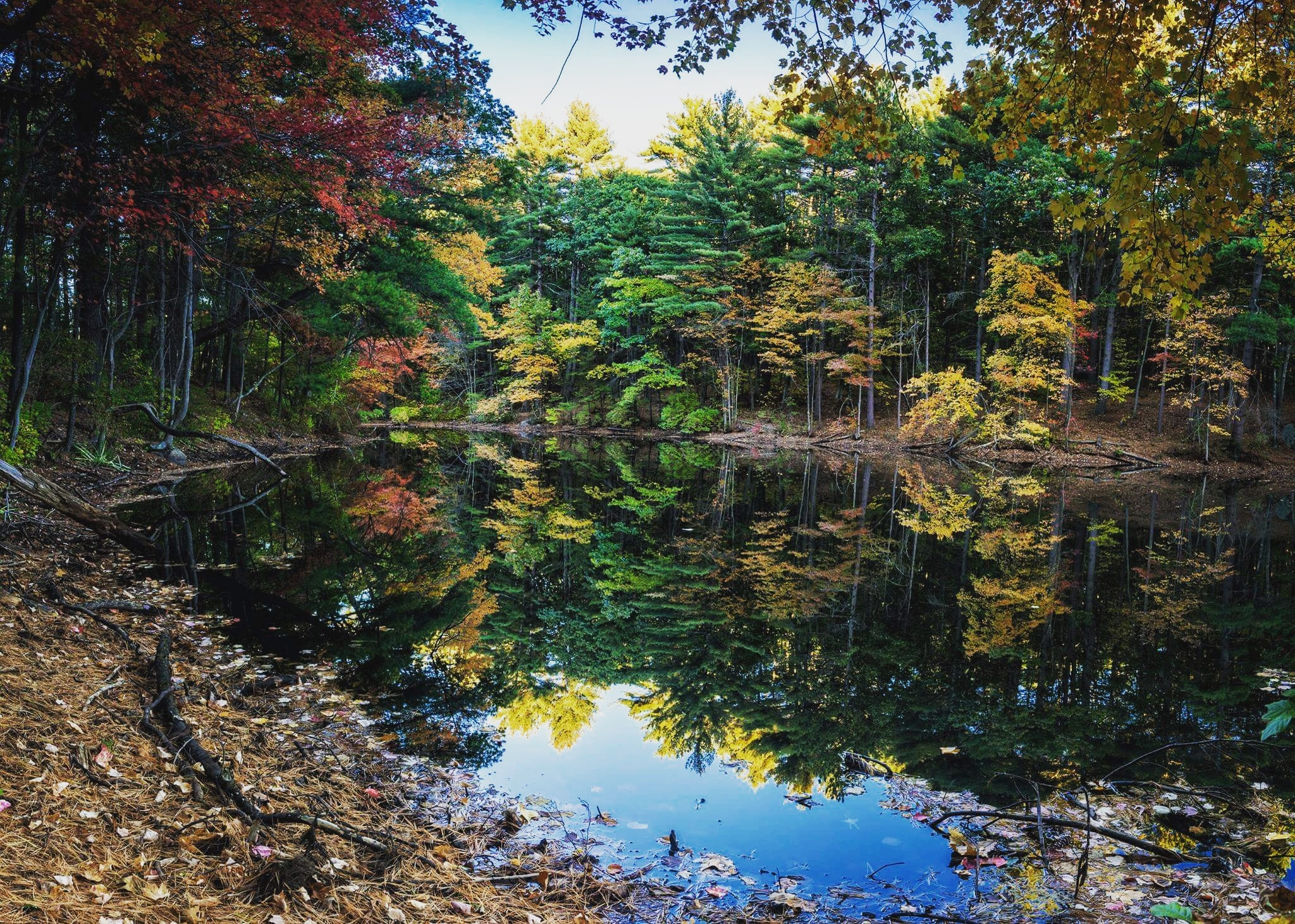 Autumn Reflections  by Donny Campos