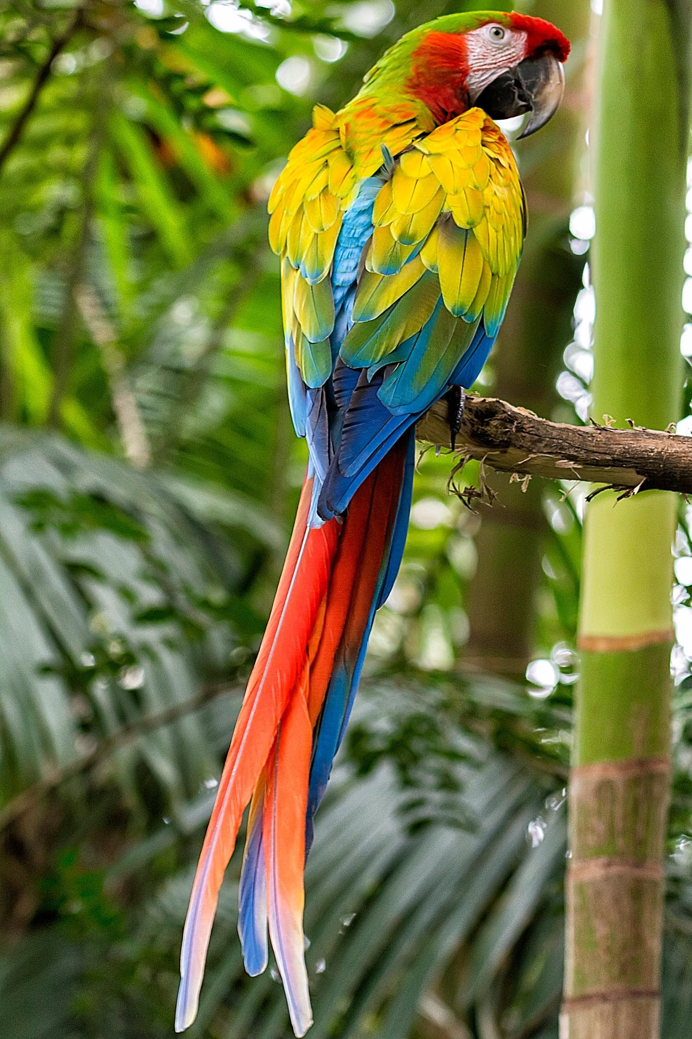 Hybrid Macaw by Donny Campos