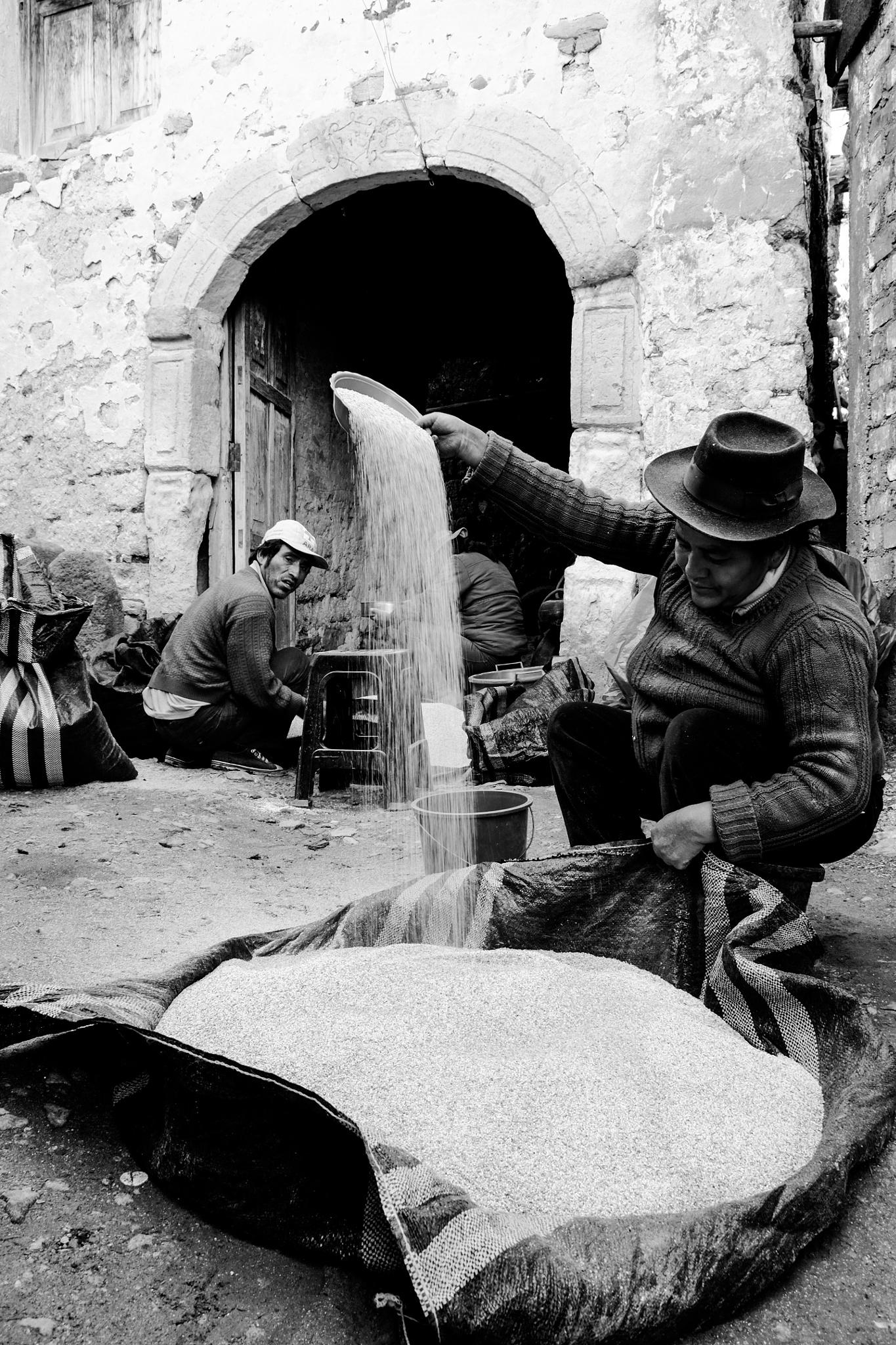 AGRICULTORES DE QUINUA by Gerardo leon