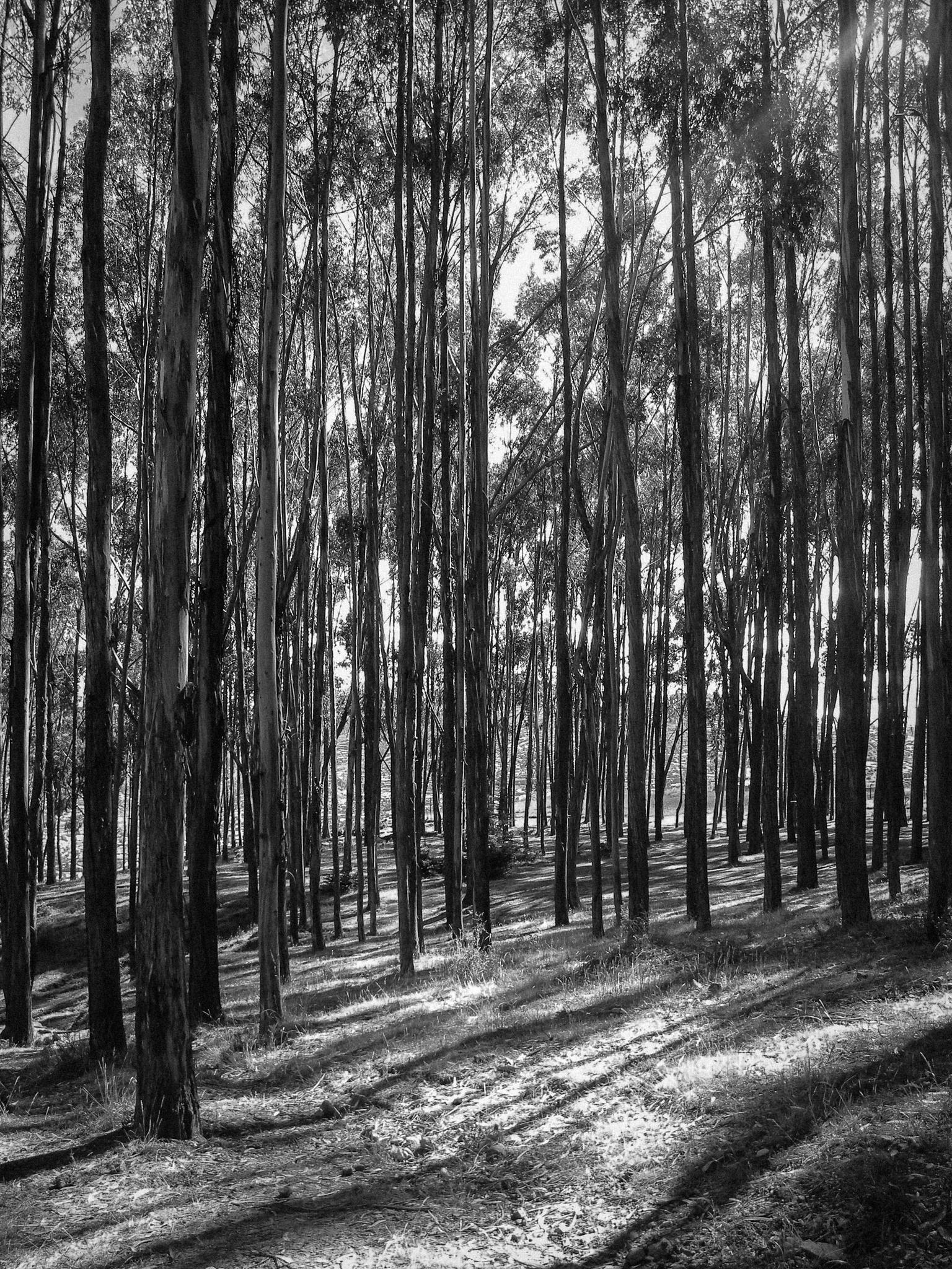 Bosque by Gerardo leon