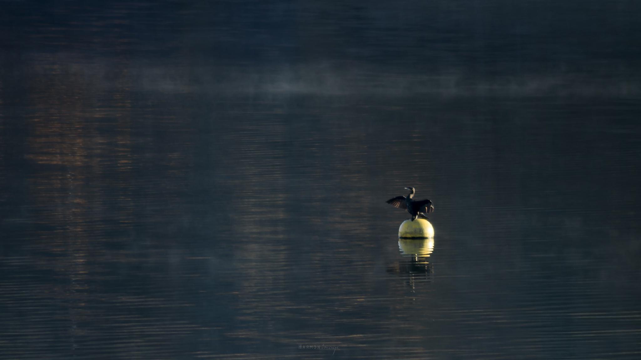 seigneur du lac by Harmonimage