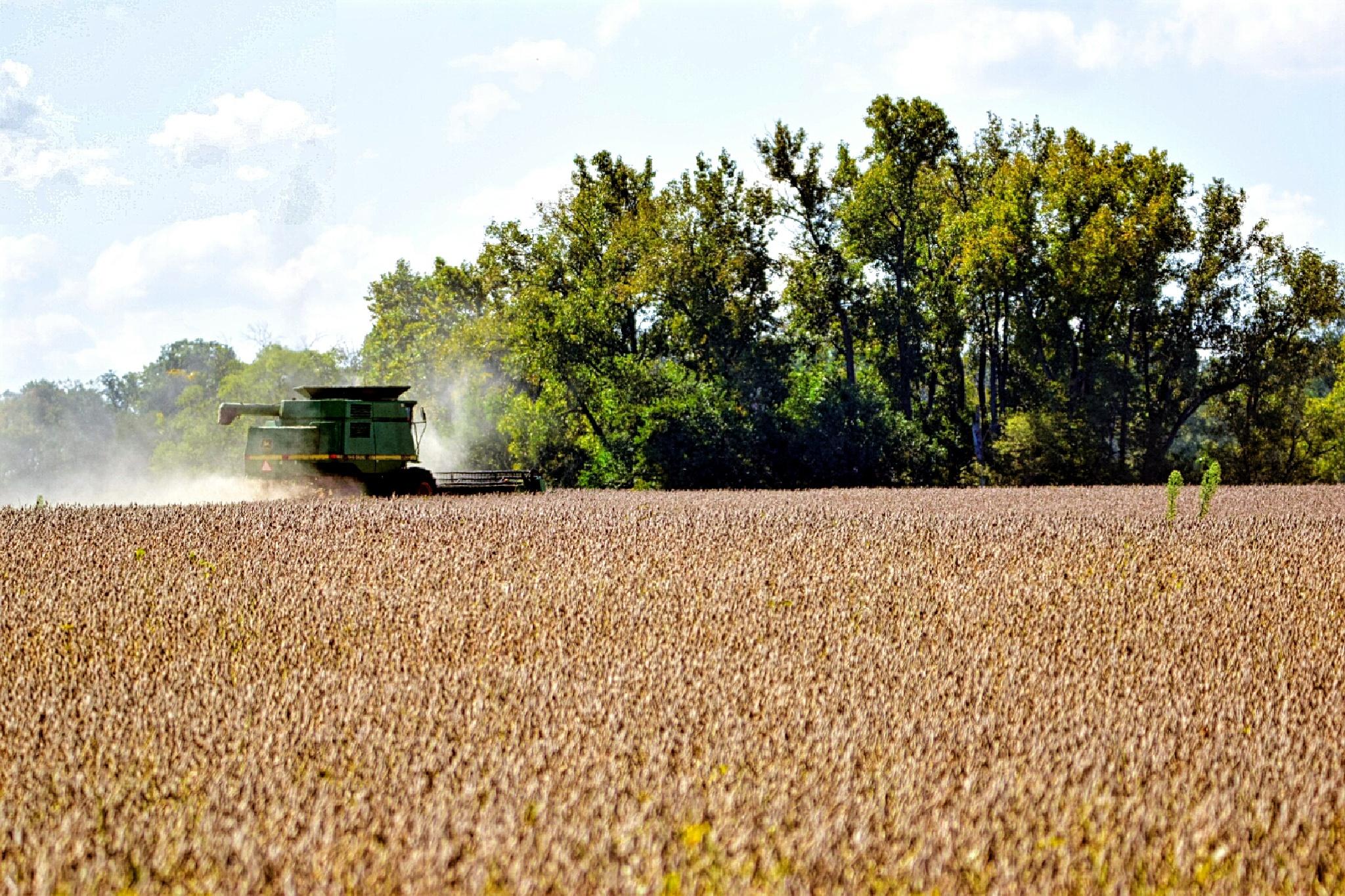 Harvest Time by Tom Kitchen