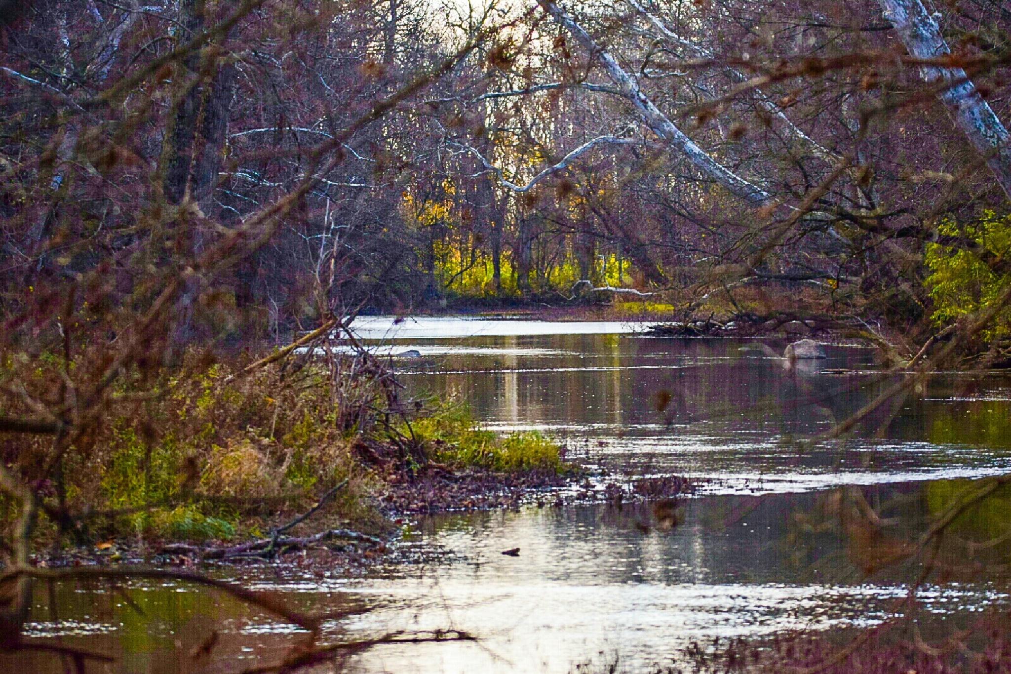 Darby Creek by Tom Kitchen