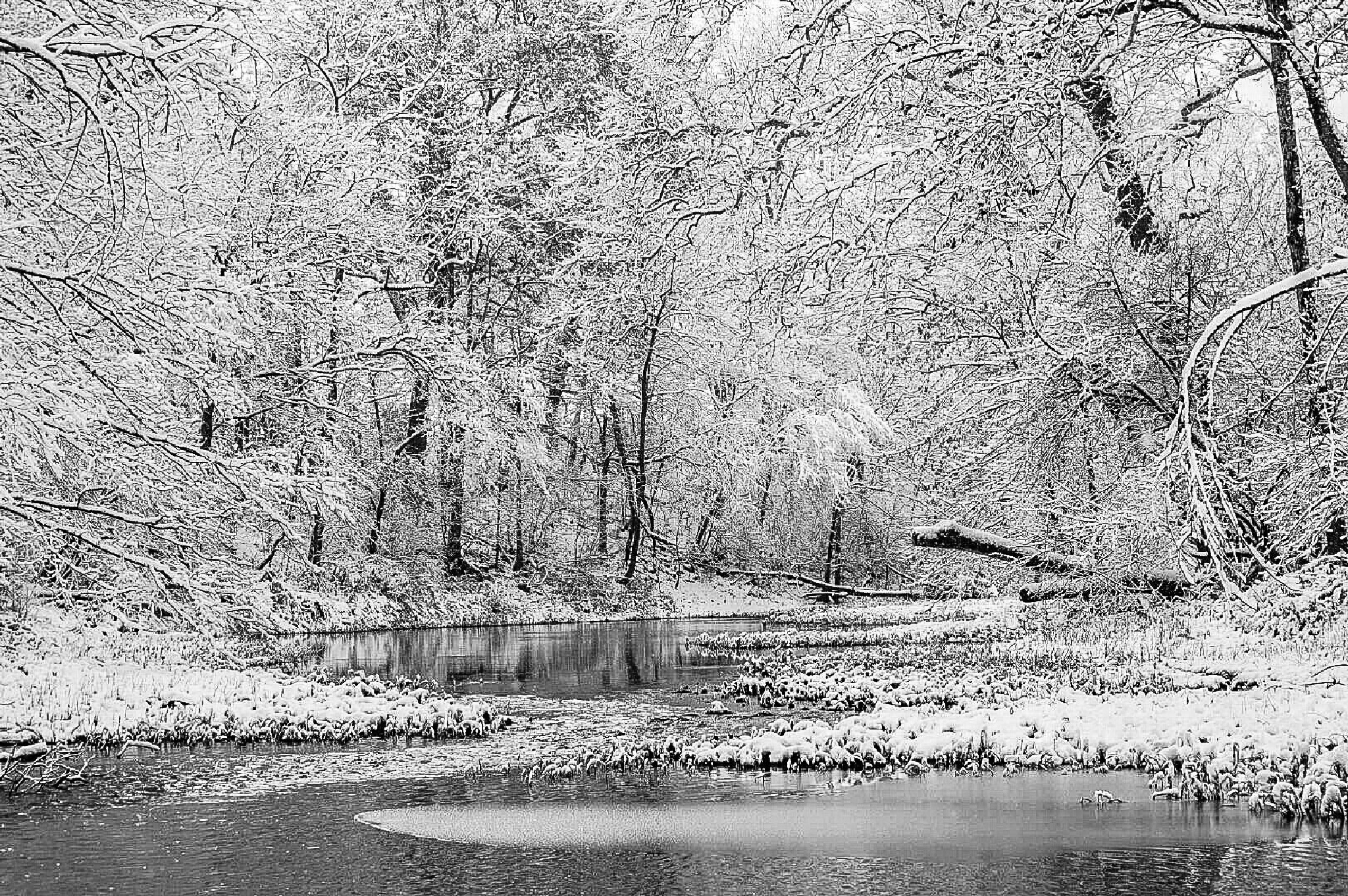 Winter on the Darby  by Tom Kitchen