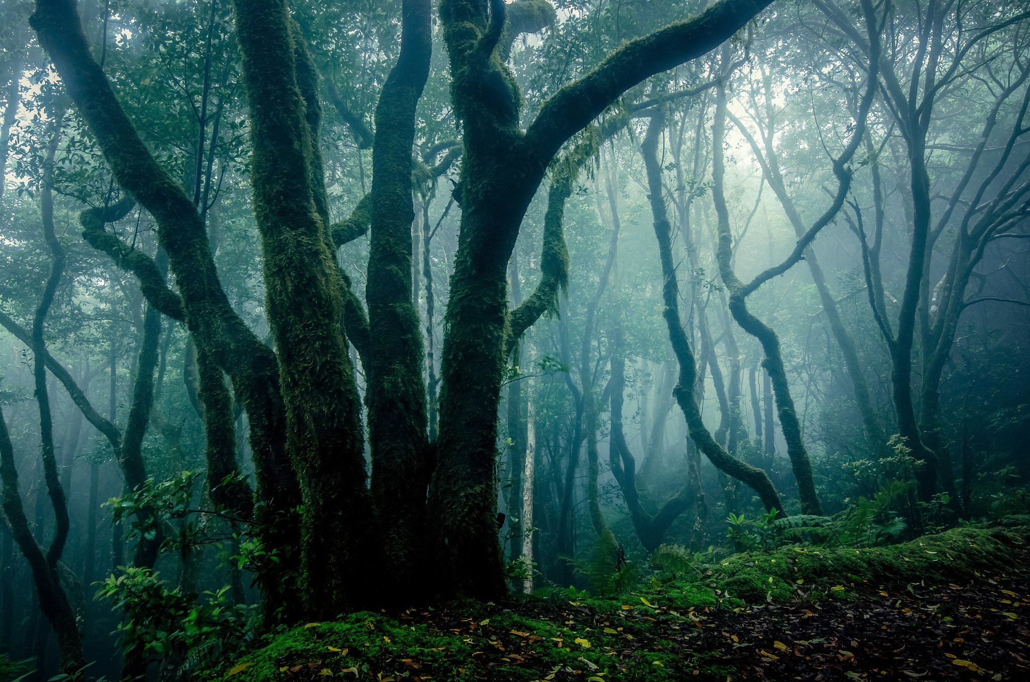 Fog in the forest.. by JACRIS