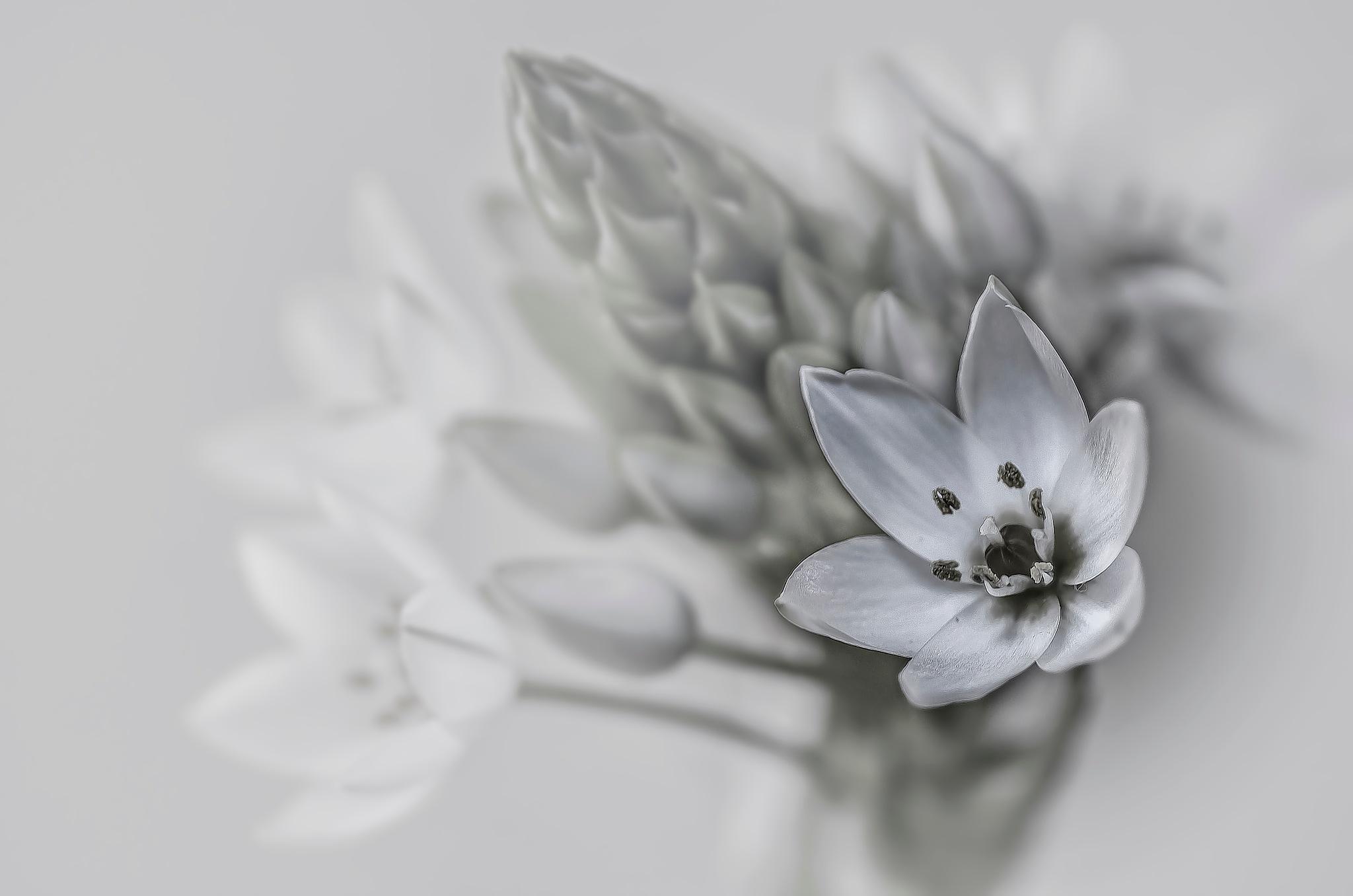 Soft.... by JACRIS