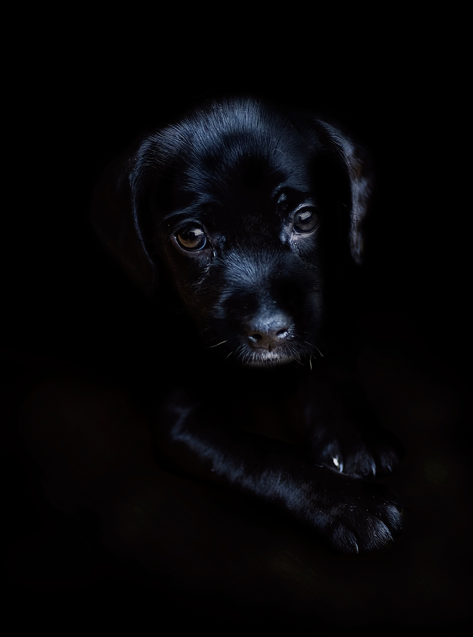 Black... by JACRIS