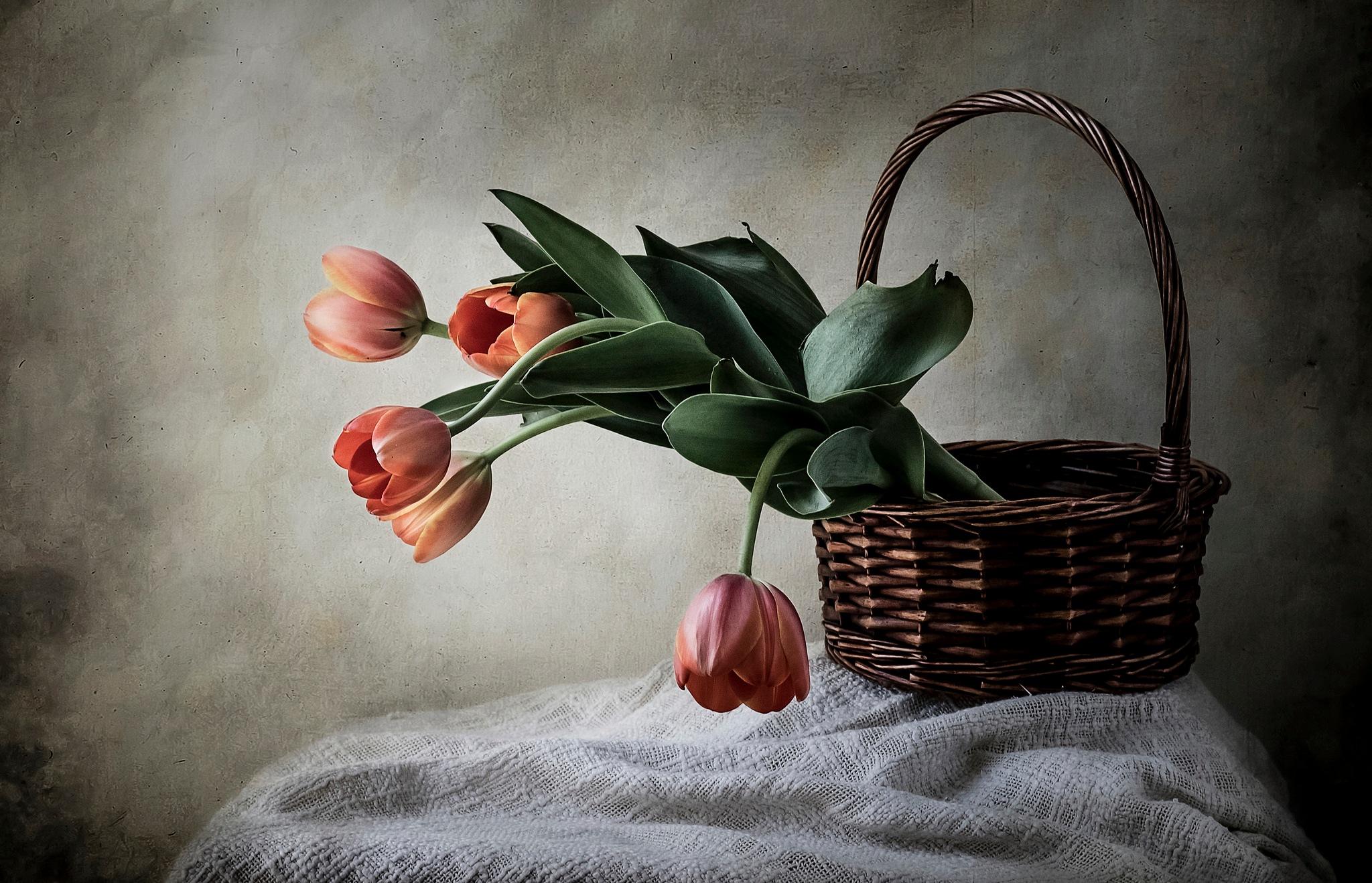Cesta con tulipanes by JACRIS