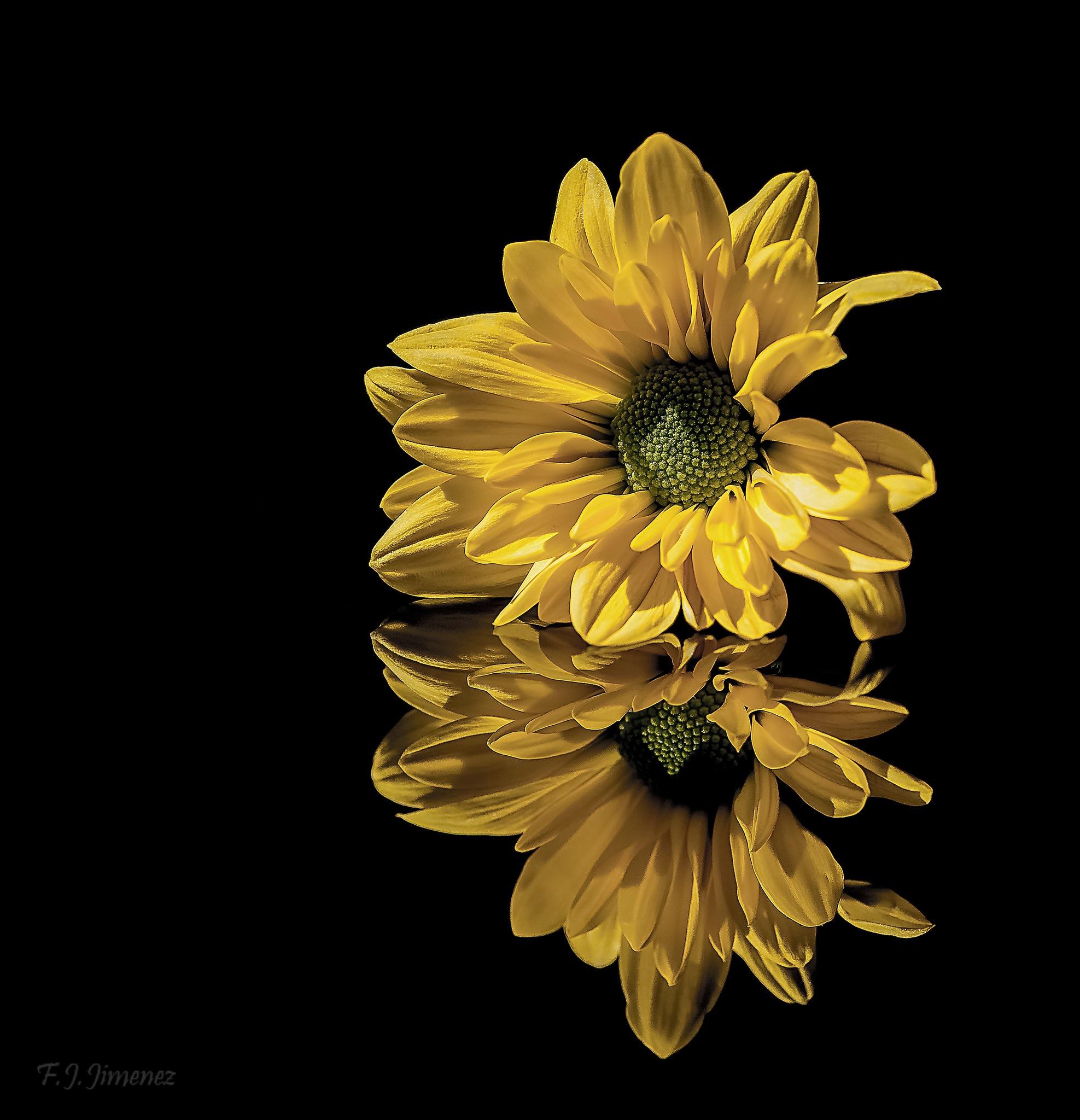 Reflejo amarillo by JACRIS