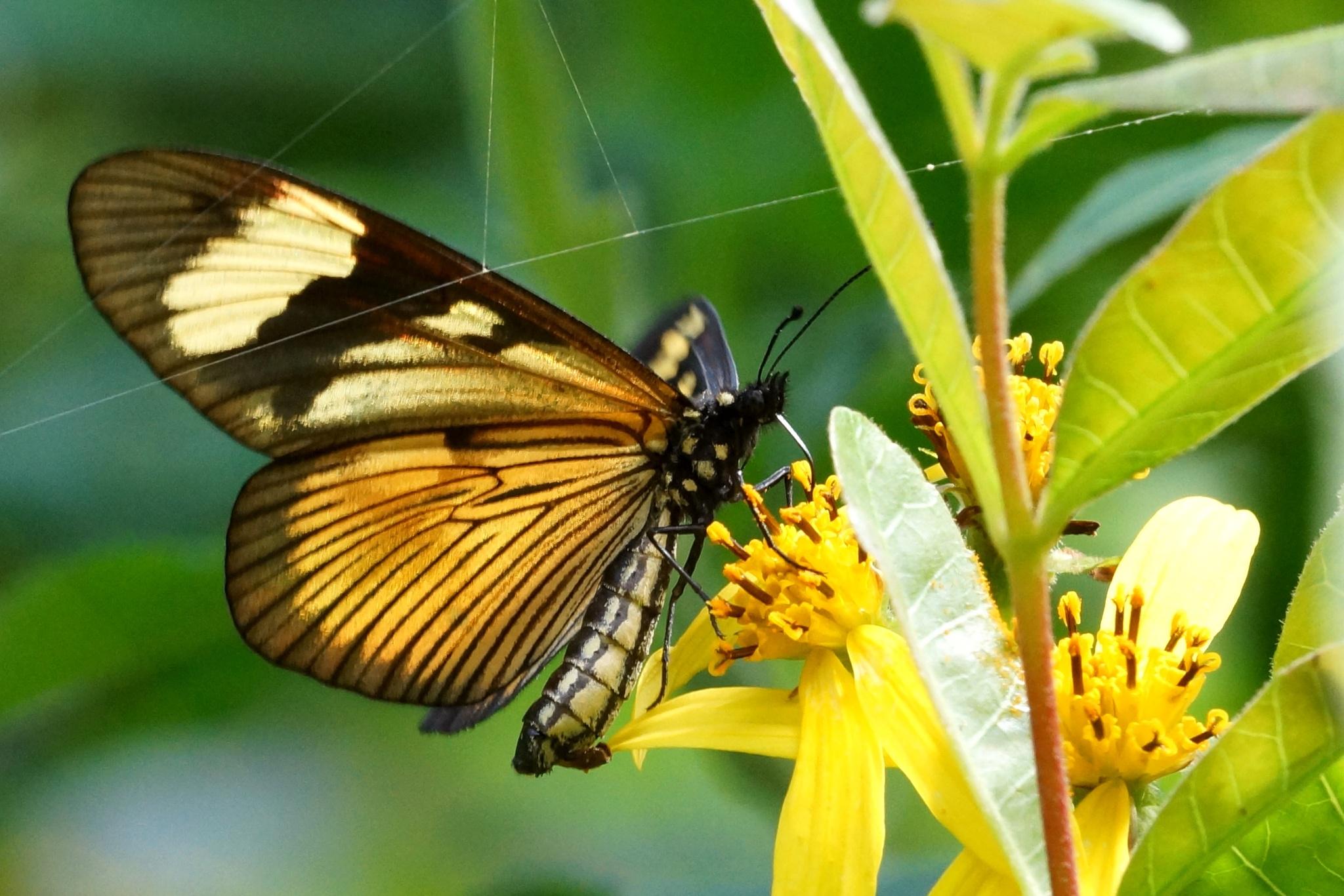 yellow butterfly & flowers by allenhagler59663852
