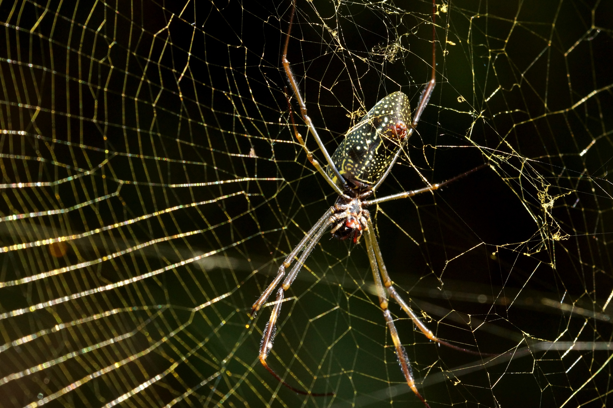 big spider on web by allenhagler59663852