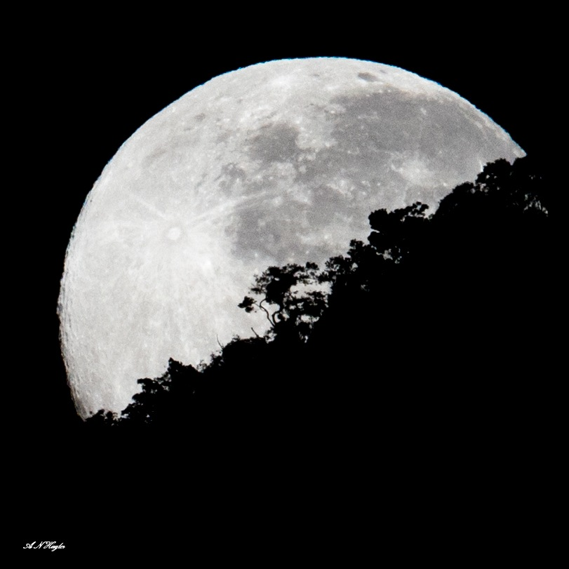 Tropical mountain forest moon-set by allenhagler59663852