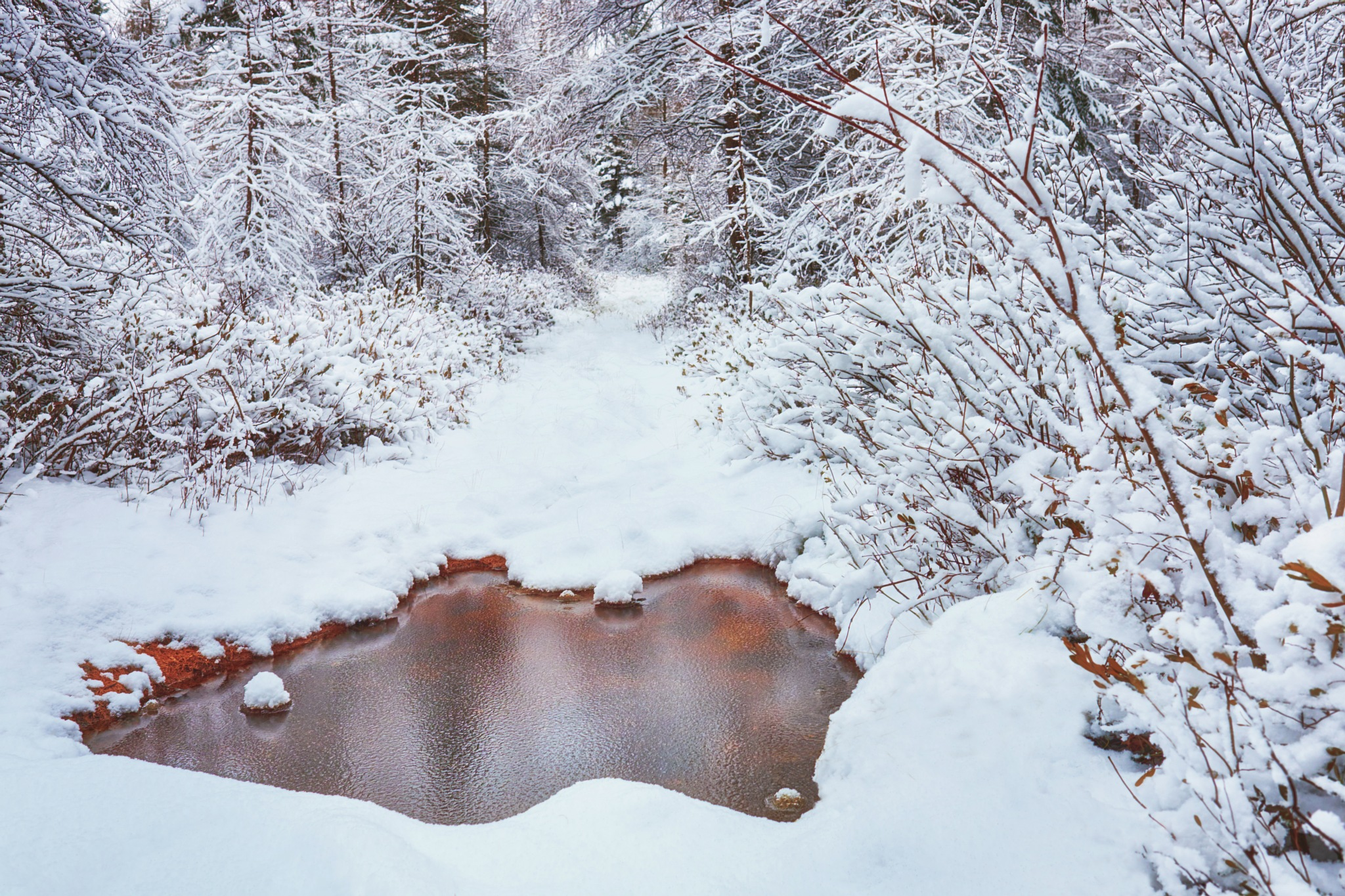 First snow by Stephen Clough