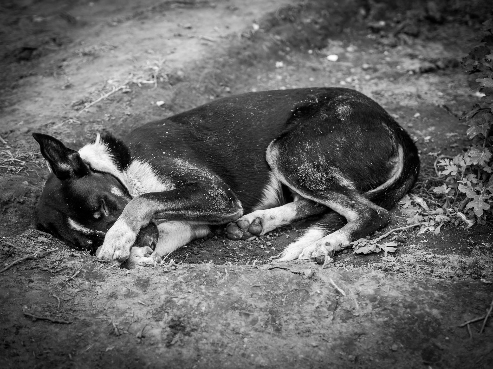 dog by Oliver Penack