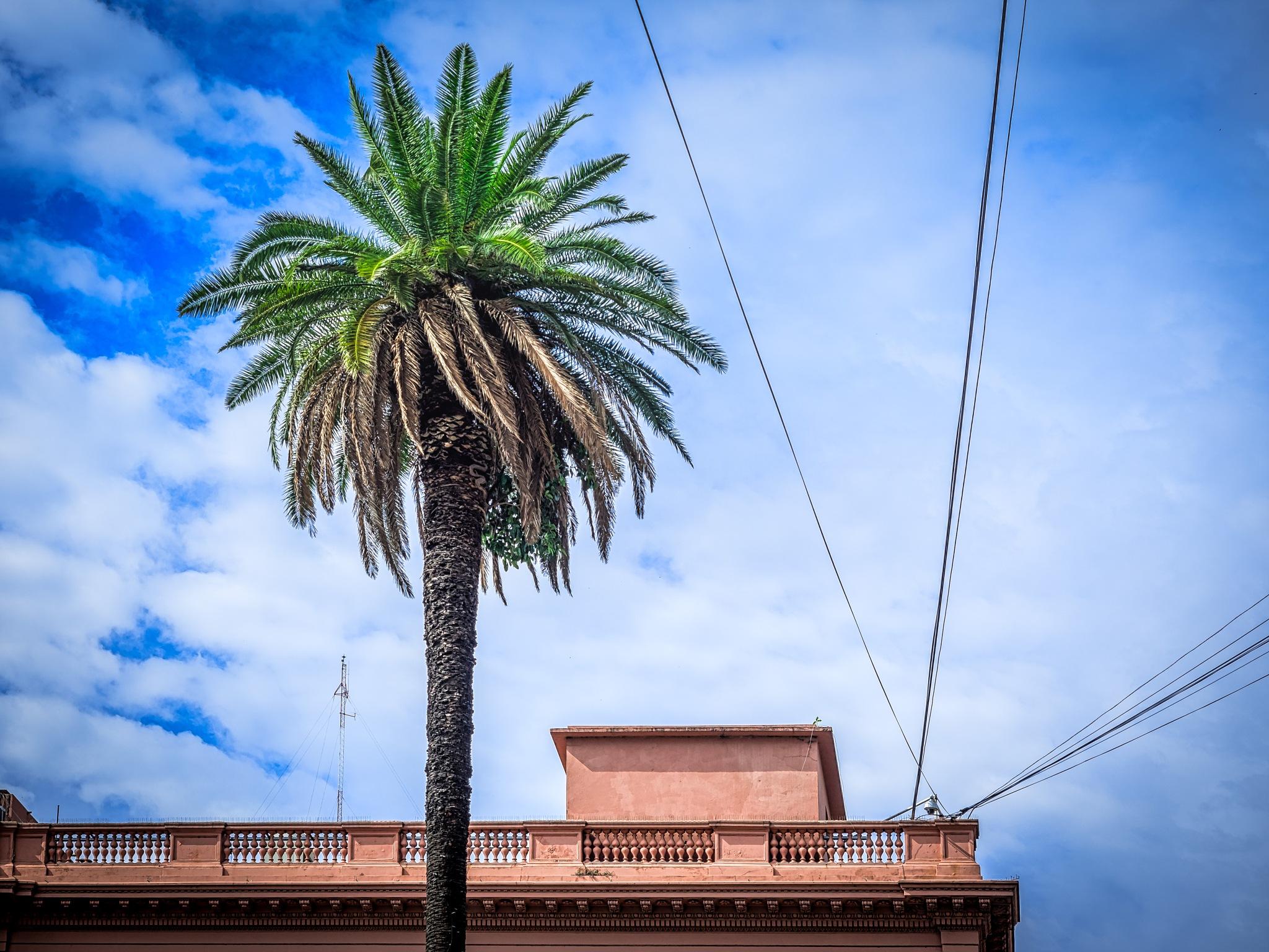 palm tree by Oliver Penack