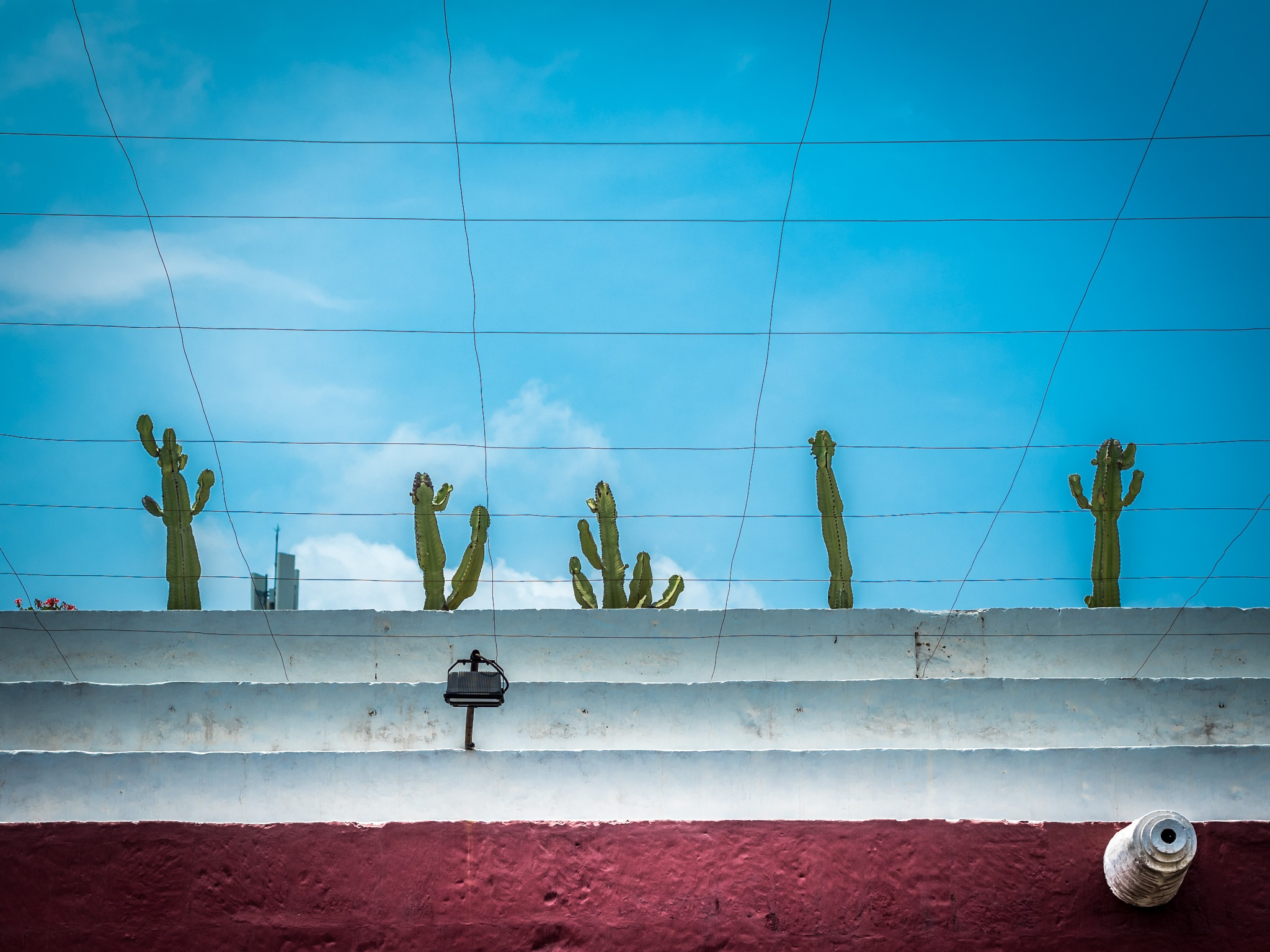 cactus by Oliver Penack