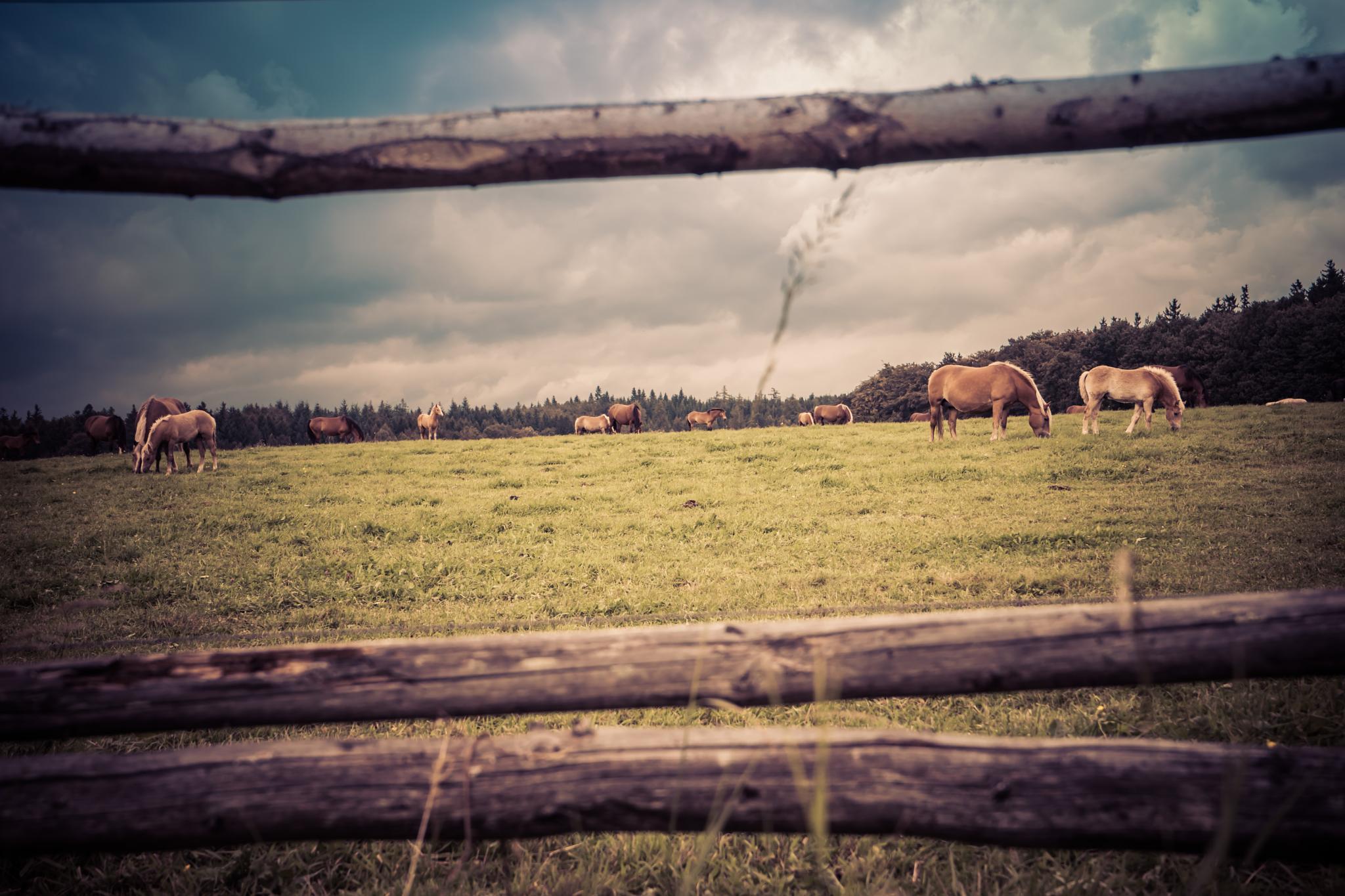 Pferdekoppel by Oliver Penack