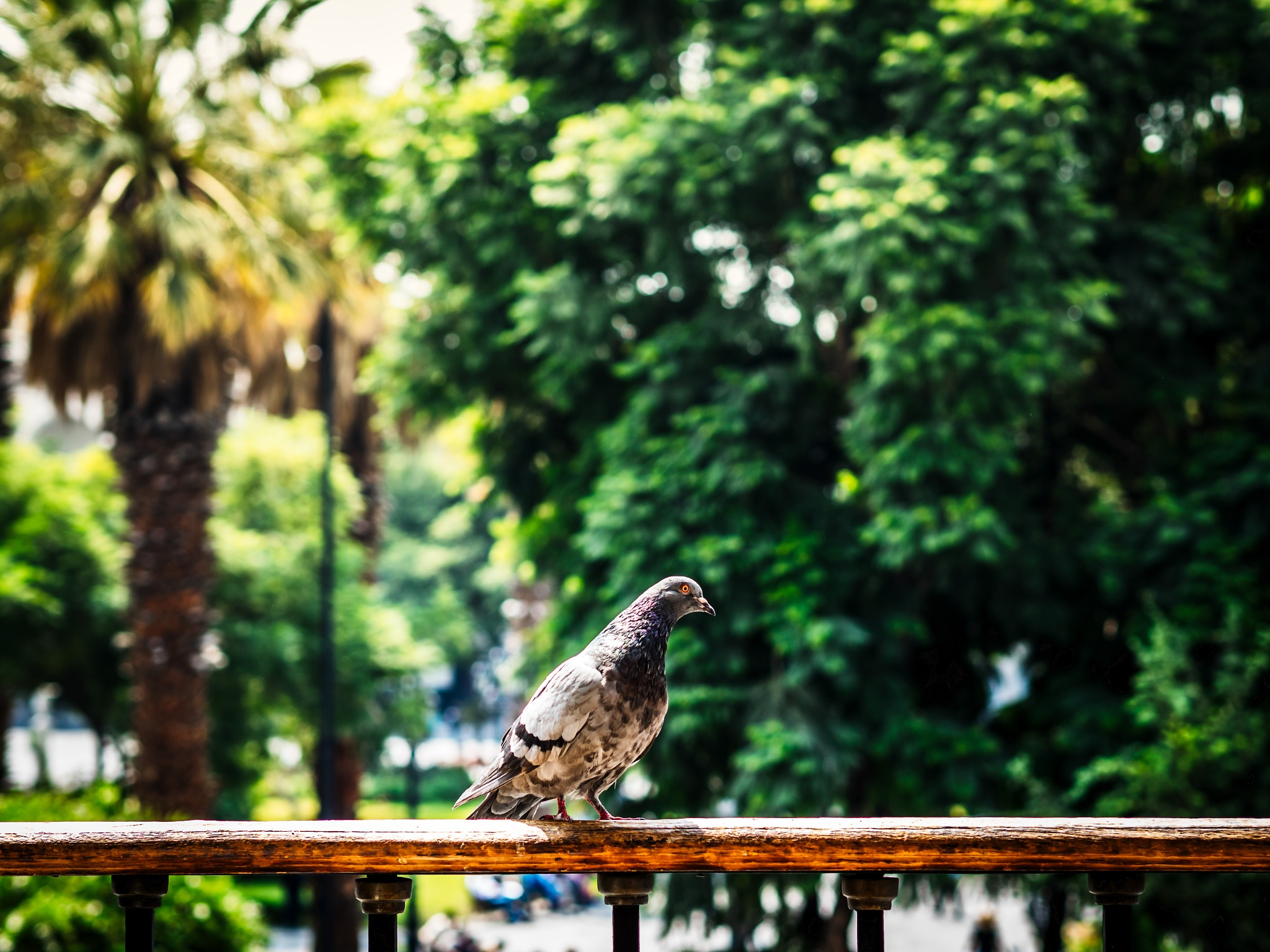 pigeon by Oliver Penack