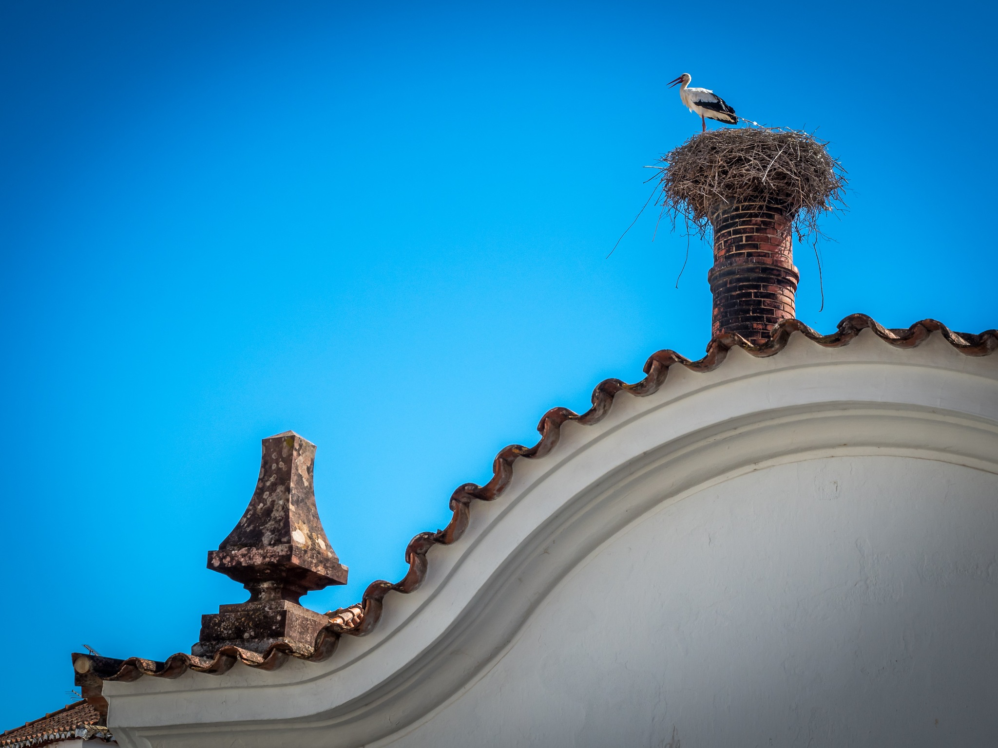 Storch in Silves by Oliver Penack