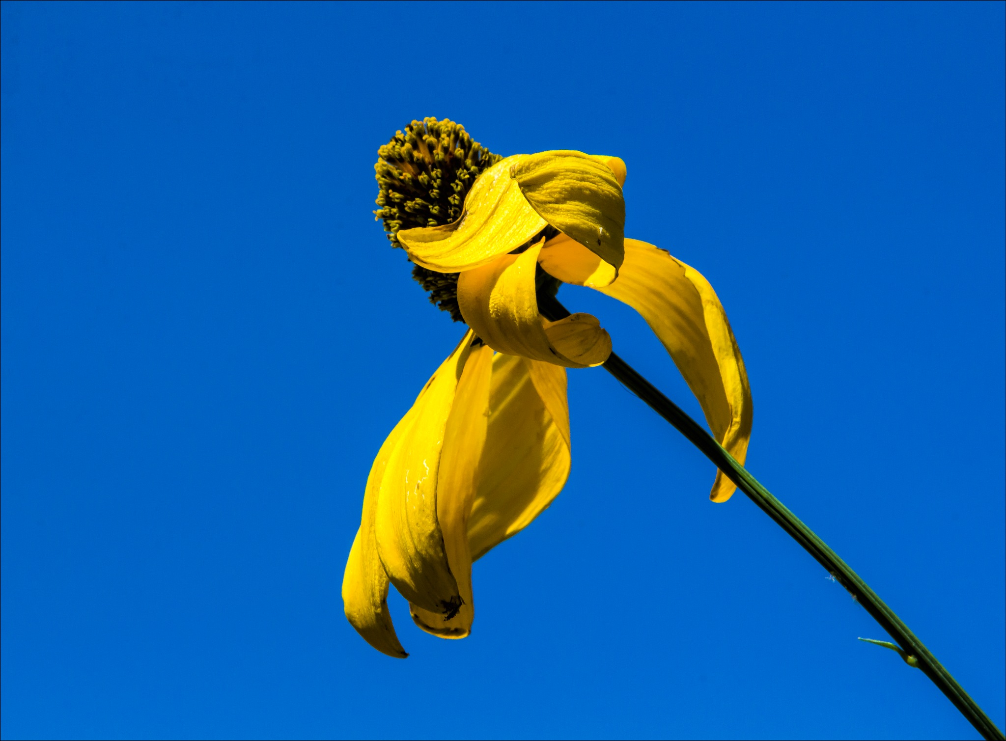 Yellow Flower Blue Sky by robertullmann