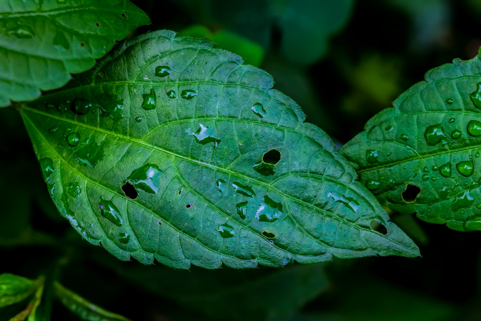 Raindrops and Leaves by robertullmann