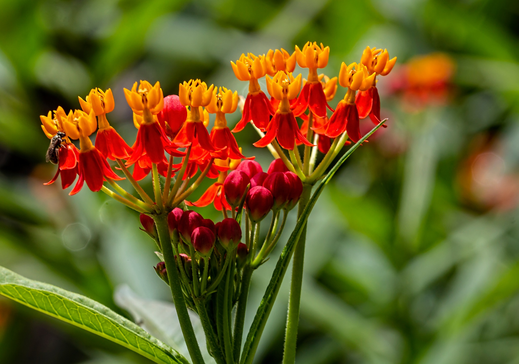 Red and Orange Flowers by robertullmann