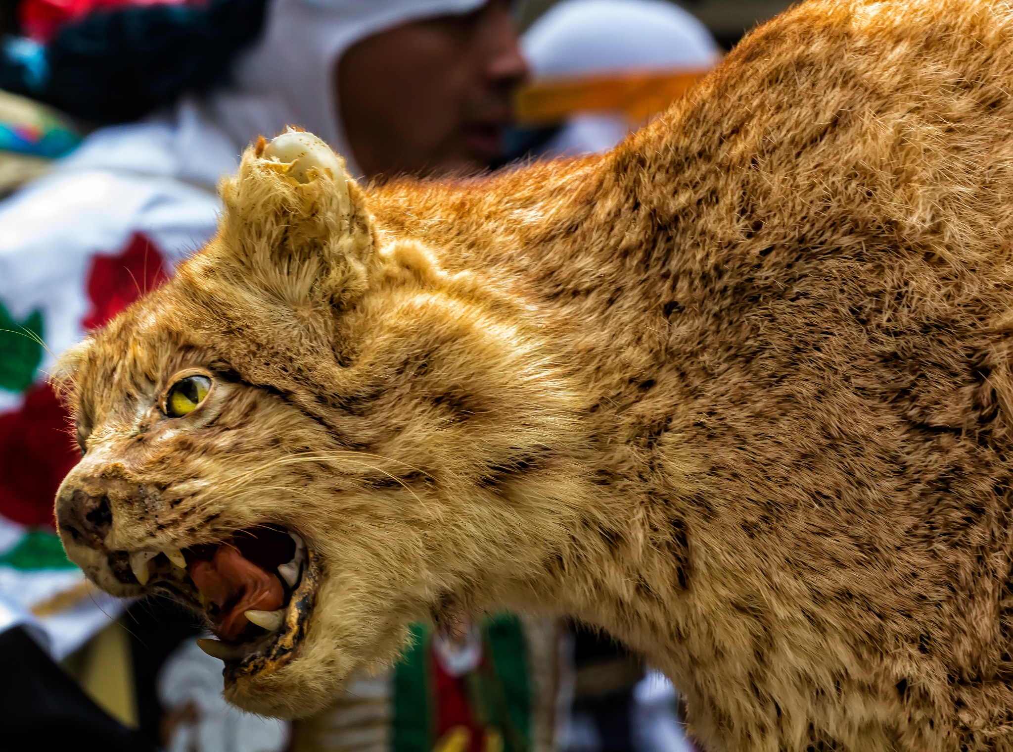 Mexican Day Parade NYC 2016 animal on costume by robertullmann