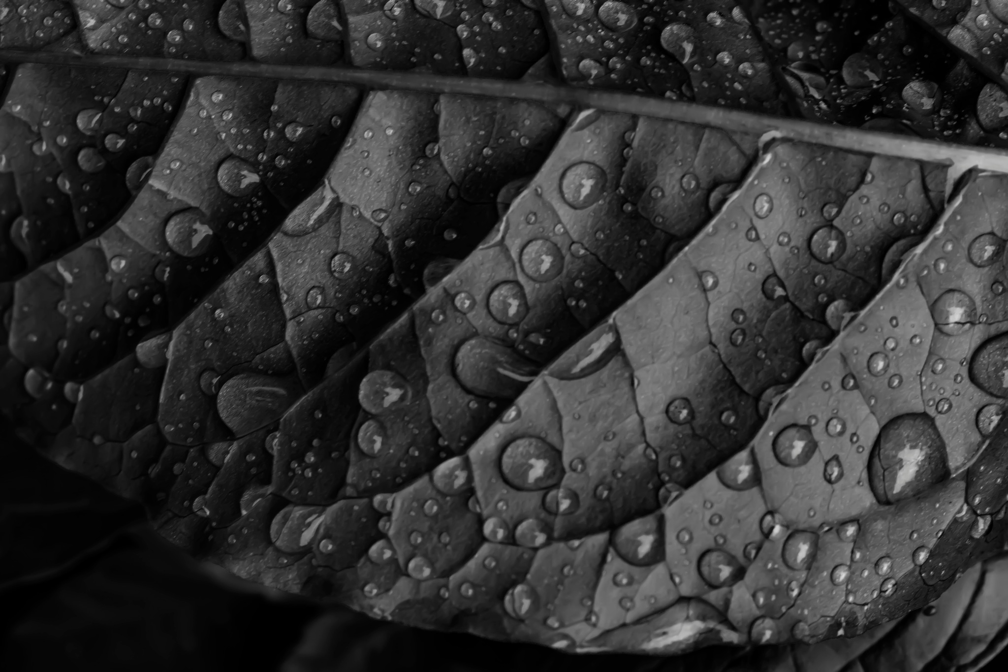 Raindrops and Leaf by robertullmann
