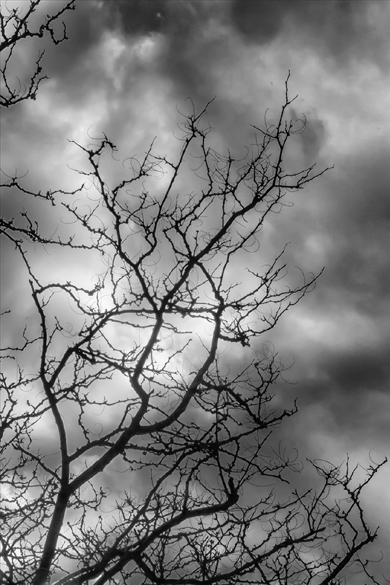 Trees Clouds and Sky by robertullmann
