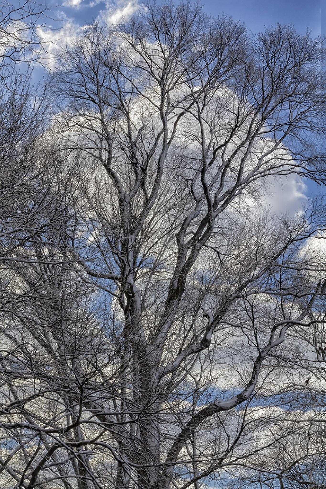 Snow Trees Sky Clouds by robertullmann