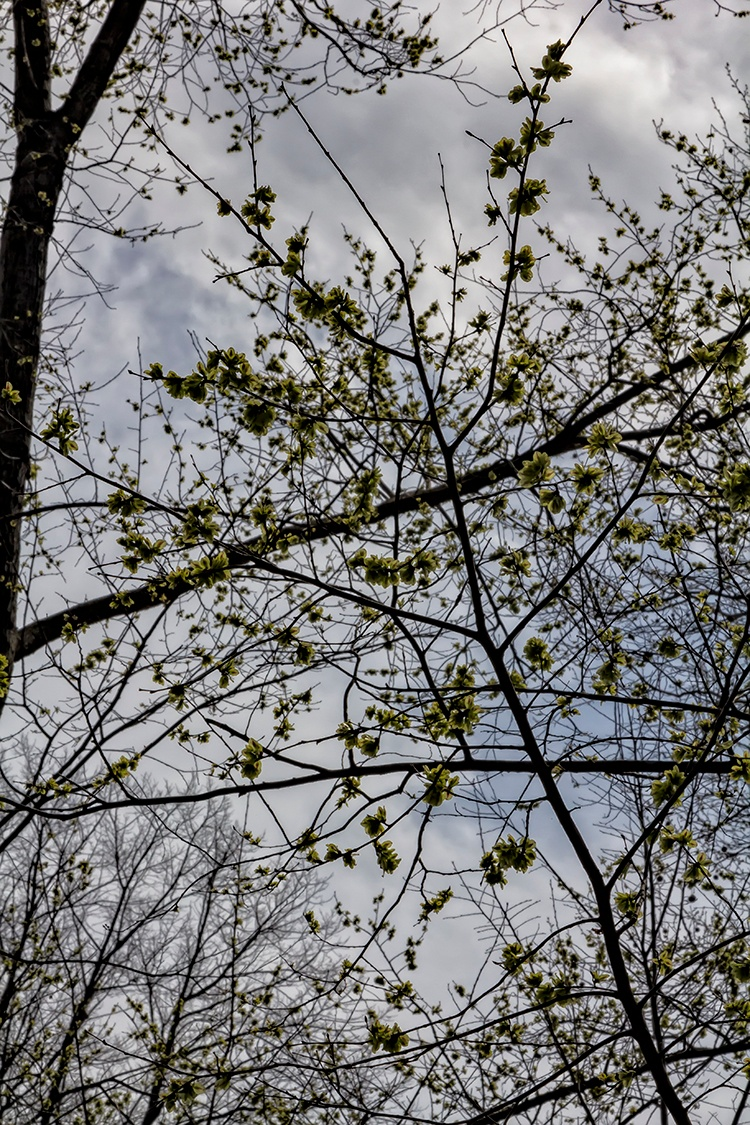 Spring Trees by robertullmann