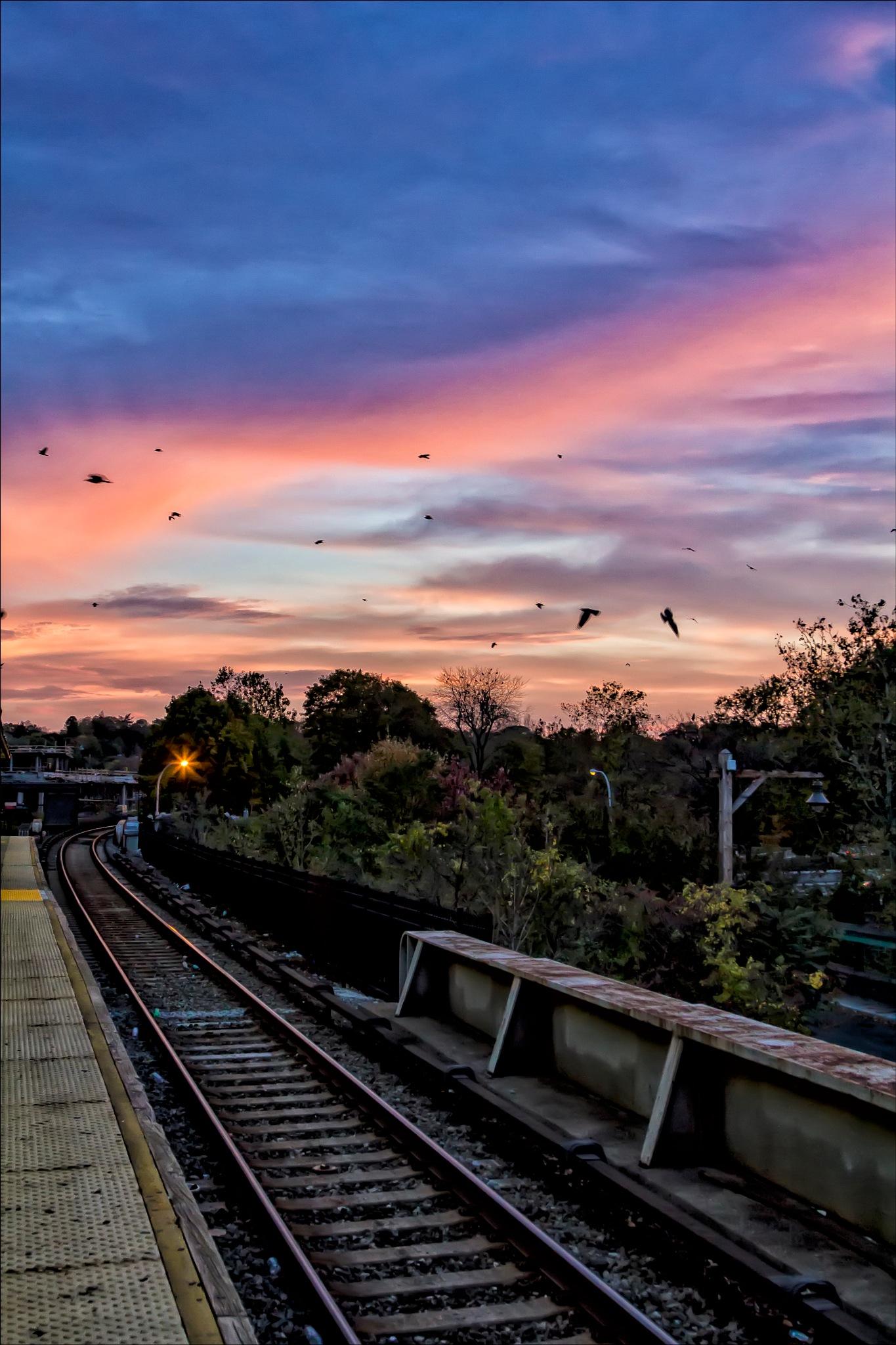 Train Tracks Sunset and Birds by robertullmann