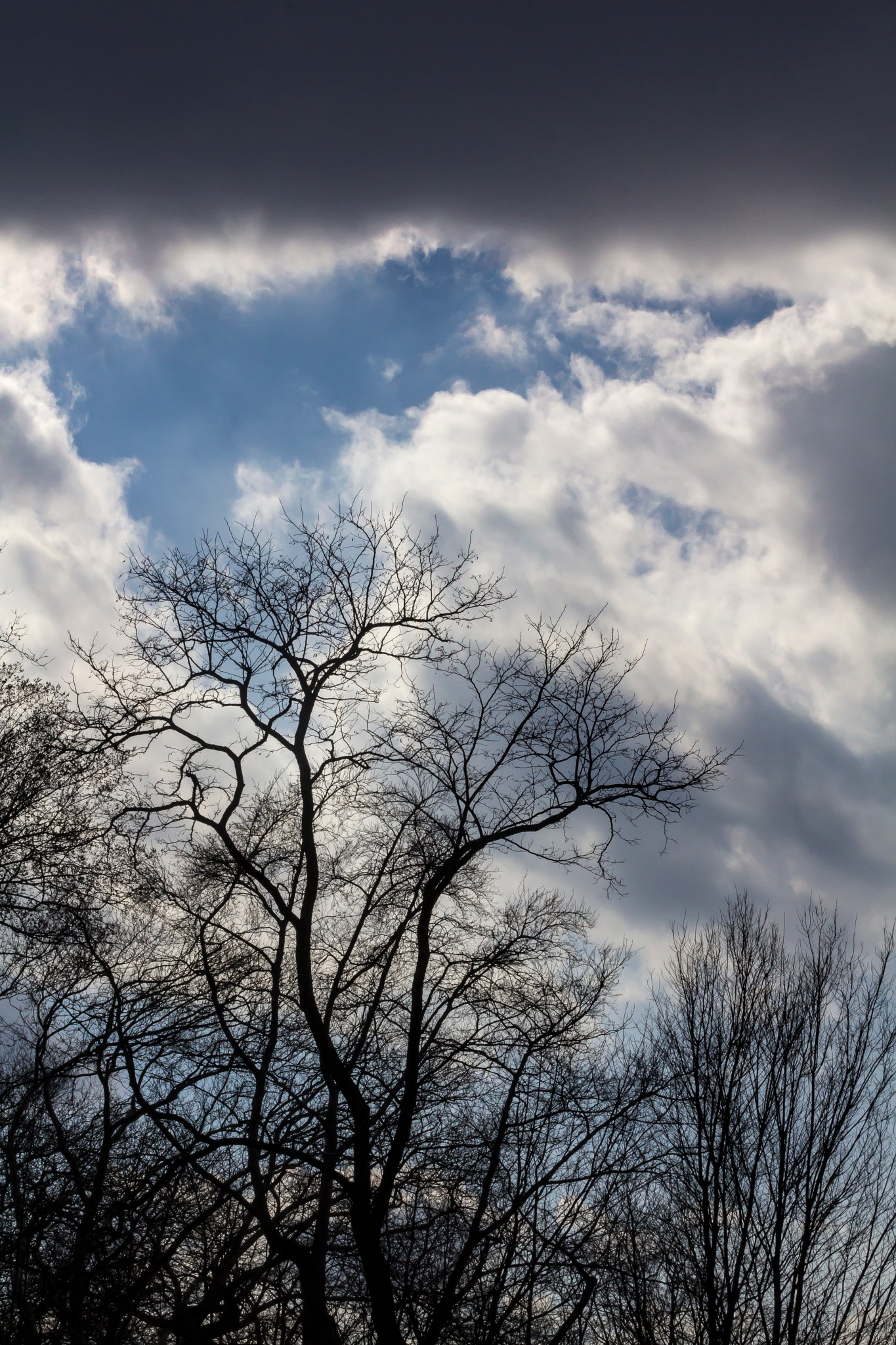 Sky Clouds and Trees by robertullmann