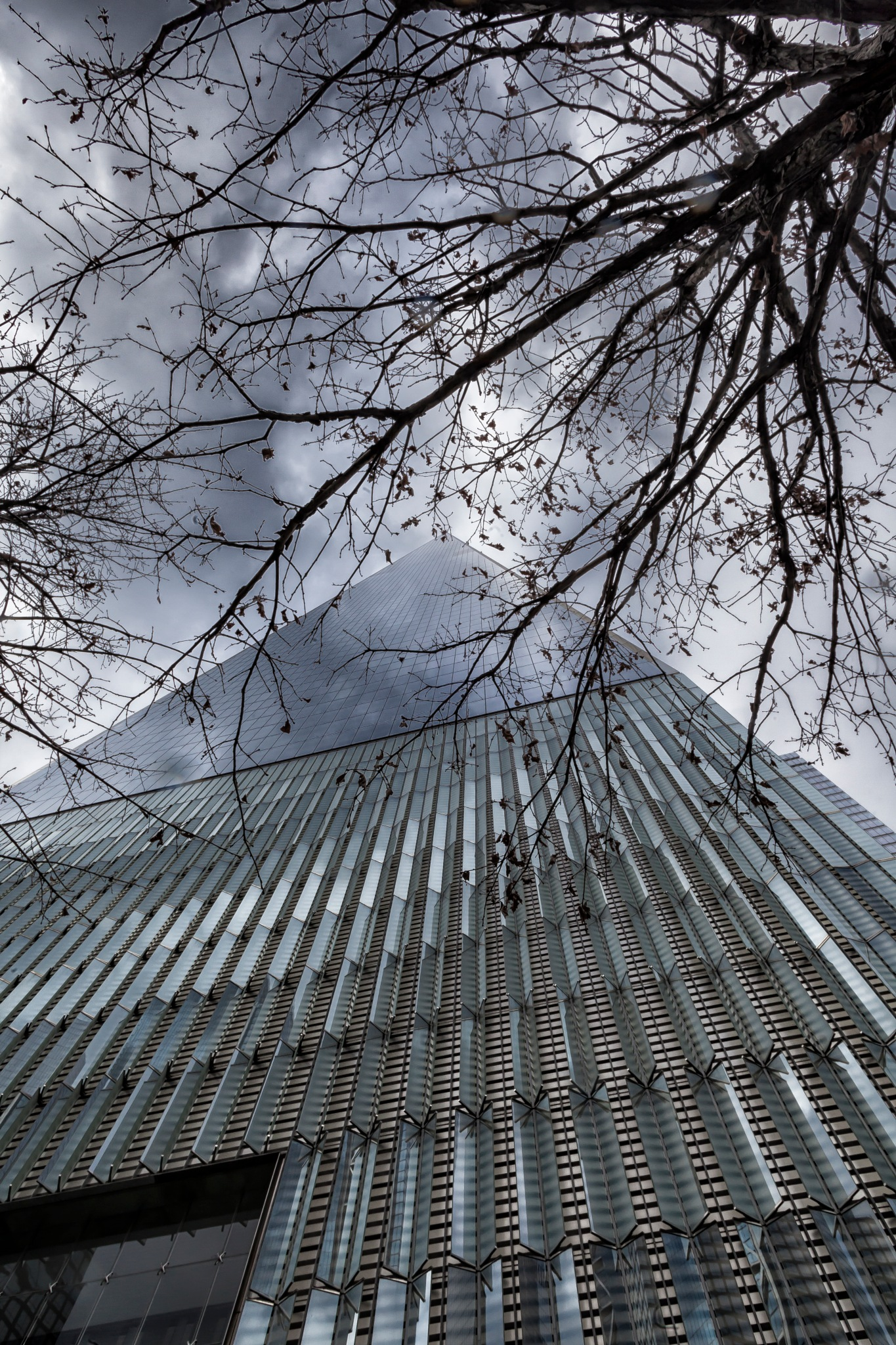 World Trade Building and Trees by robertullmann